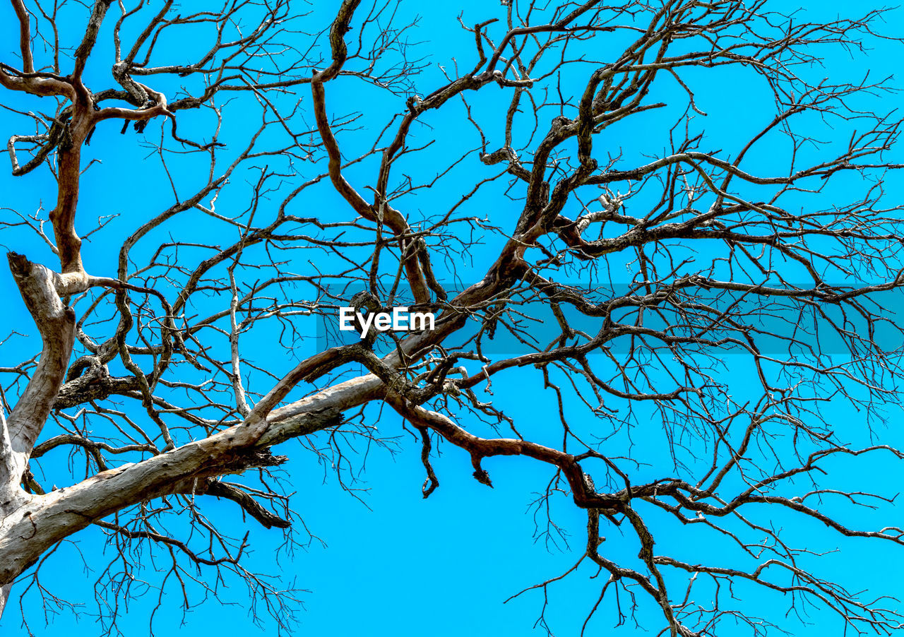 low angle view, blue, nature, branch, bare tree, tree, beauty in nature, day, no people, outdoors, tranquility, clear sky, sky