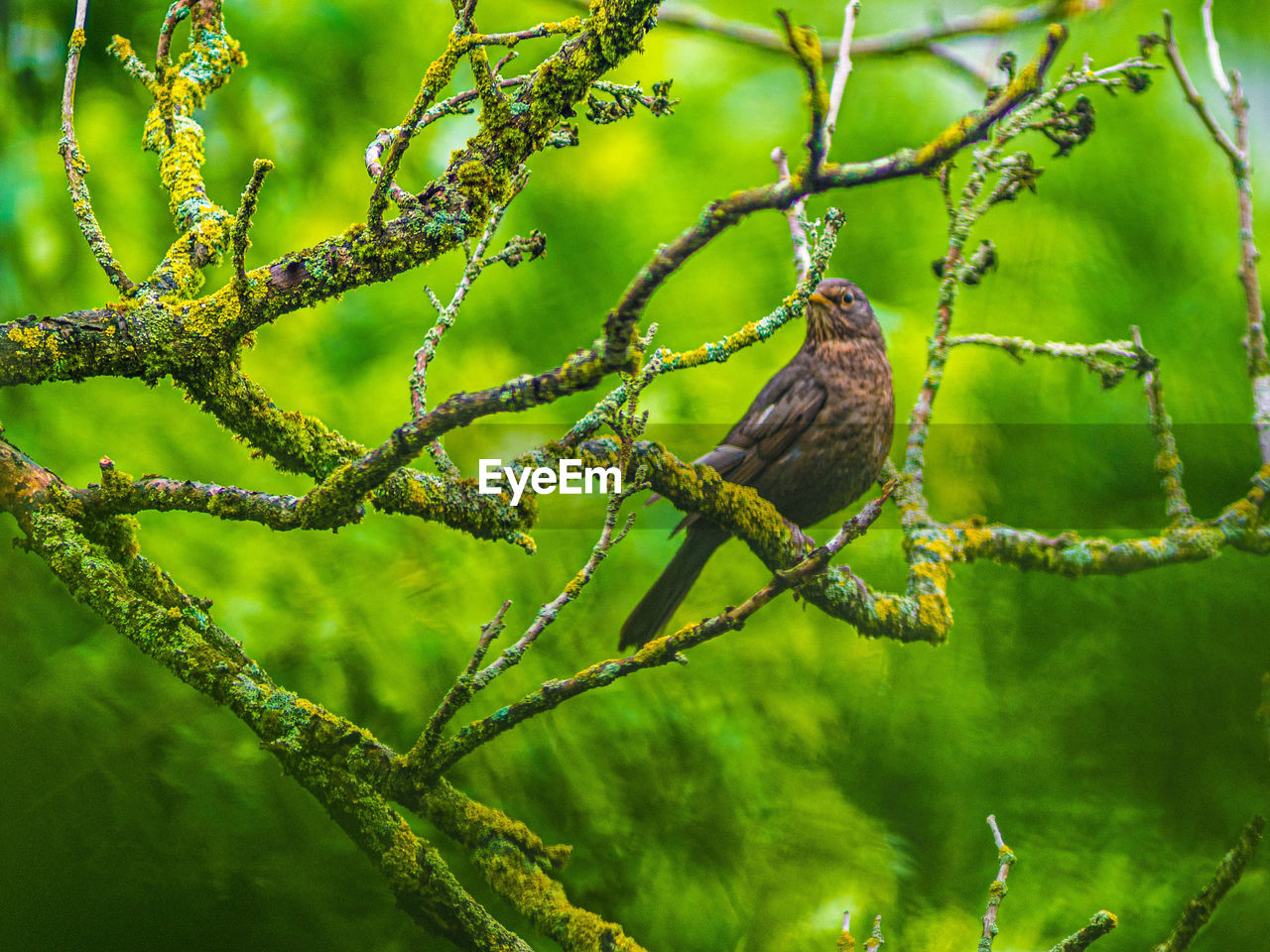 animals in the wild, animal themes, animal, animal wildlife, bird, vertebrate, perching, one animal, plant, green color, tree, branch, no people, nature, day, focus on foreground, outdoors, selective focus, close-up, growth