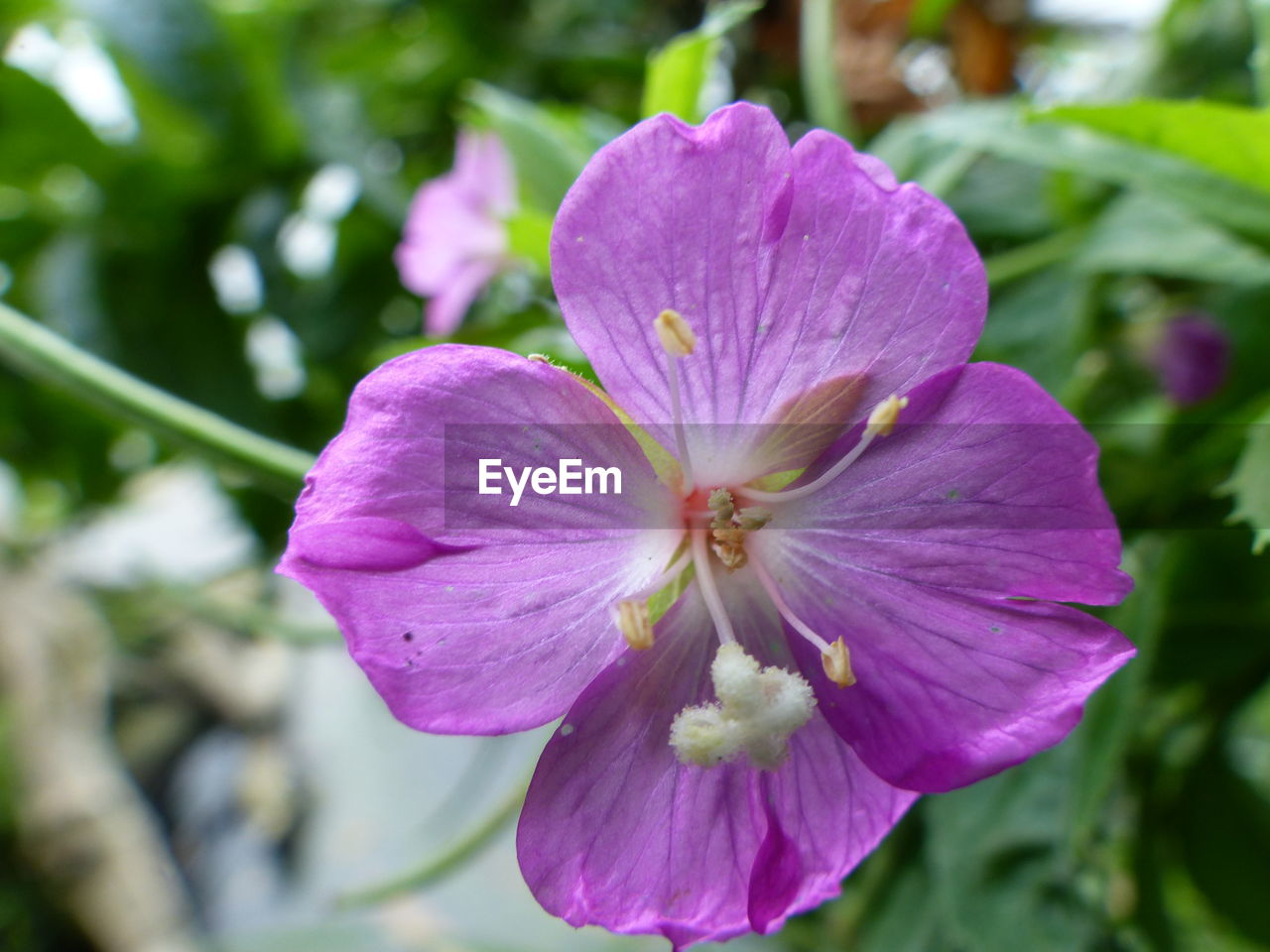 flower, petal, beauty in nature, fragility, nature, freshness, flower head, growth, day, outdoors, blooming, plant, focus on foreground, no people, close-up, petunia