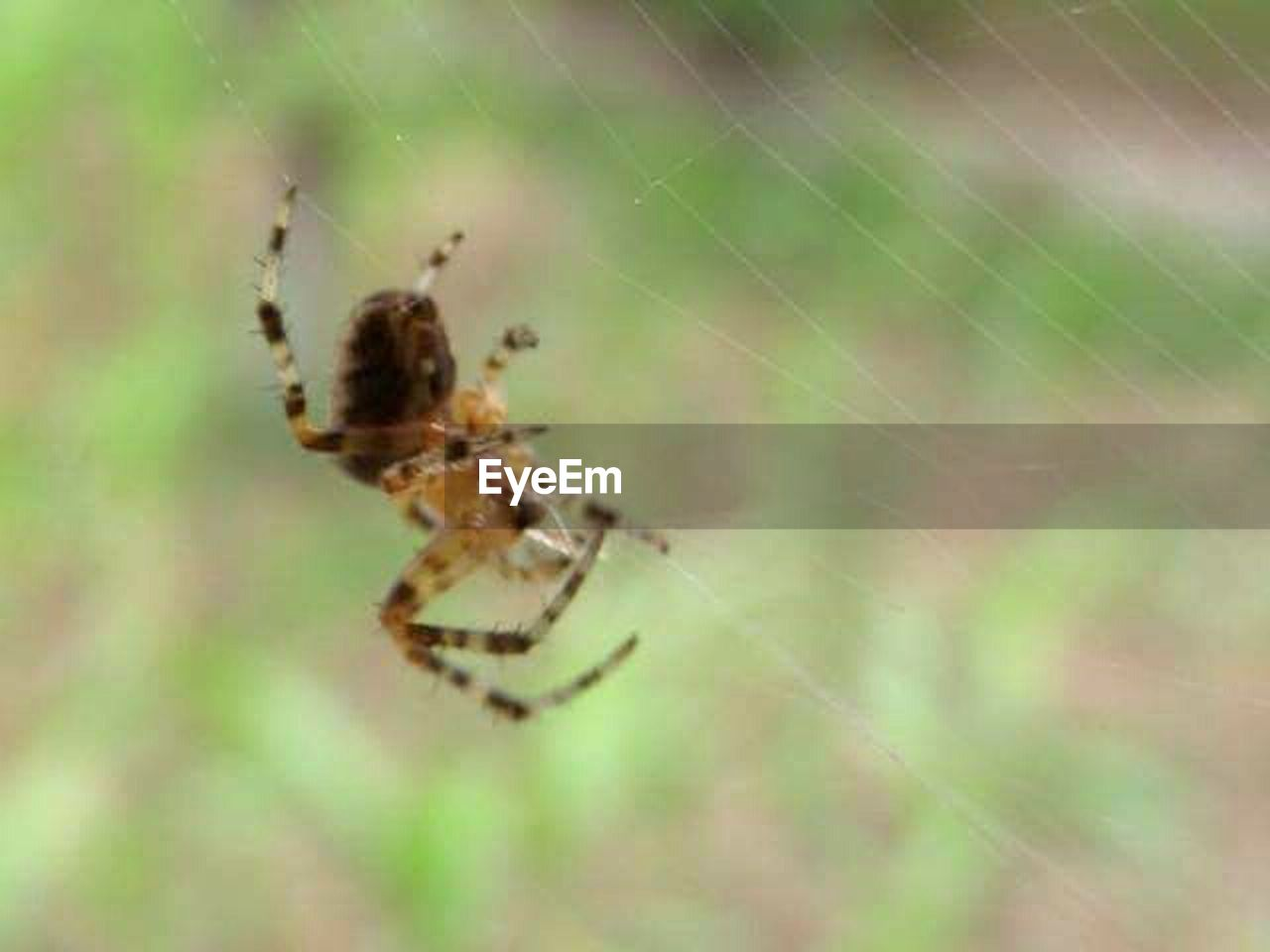 spider, spider web, animal themes, one animal, animals in the wild, nature, focus on foreground, web, survival, insect, no people, day, close-up, outdoors, animal wildlife, animal leg, full length