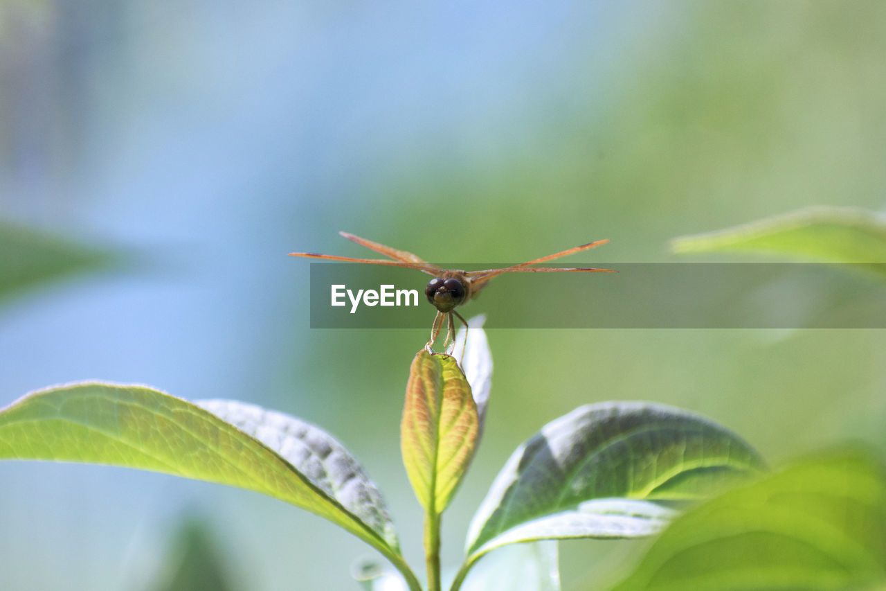 plant part, leaf, plant, close-up, invertebrate, growth, animals in the wild, animal wildlife, beauty in nature, insect, nature, animal, animal themes, one animal, no people, green color, focus on foreground, day, flowering plant, flower, outdoors