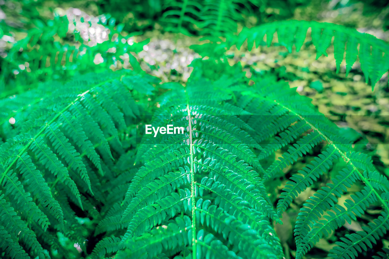 green color, leaf, plant part, growth, close-up, nature, plant, no people, beauty in nature, day, fern, full frame, natural pattern, backgrounds, outdoors, pattern, water, freshness, selective focus, high angle view, marine