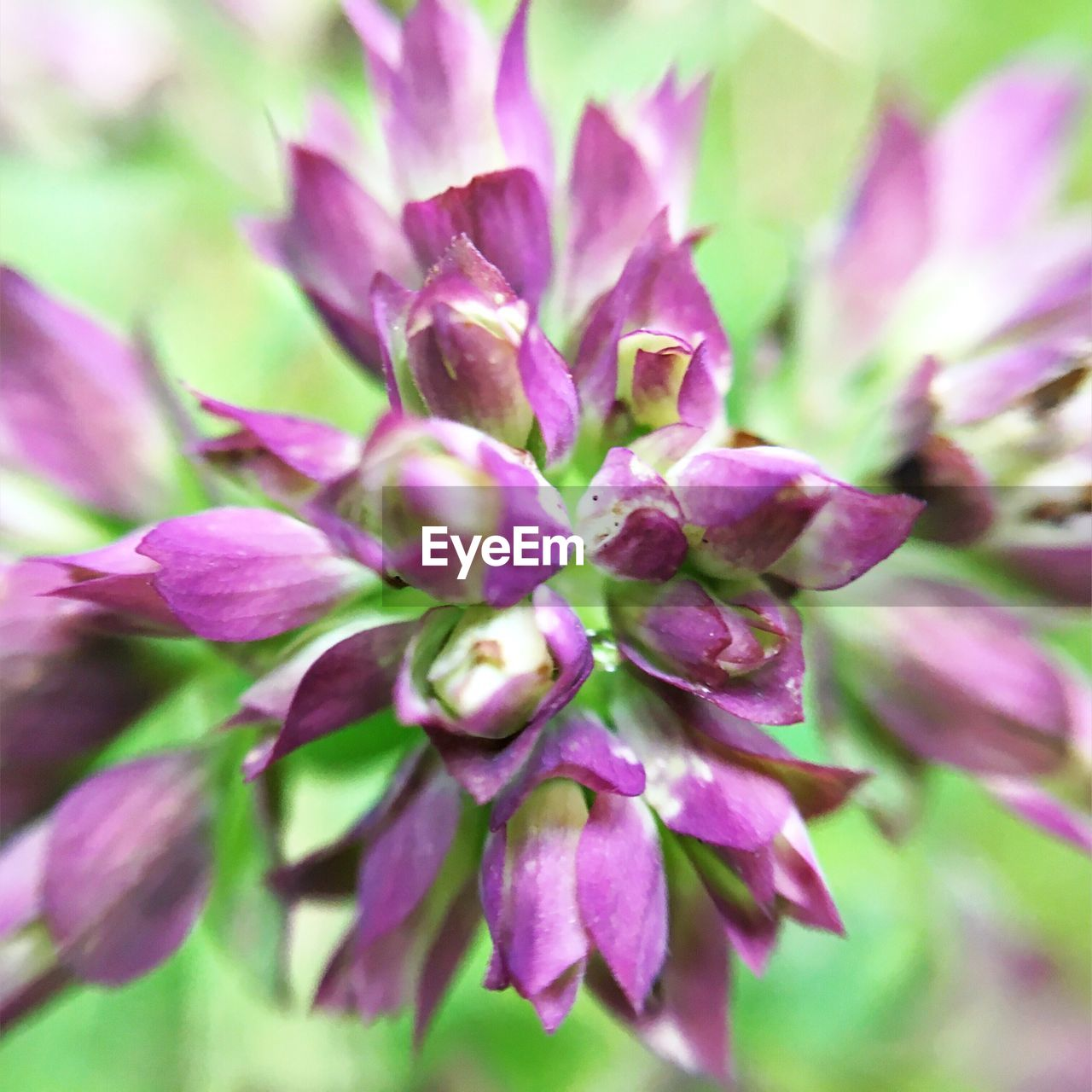 flower, nature, growth, purple, beauty in nature, plant, delicate, no people, outdoors, close-up, blooming, fragility, freshness, day