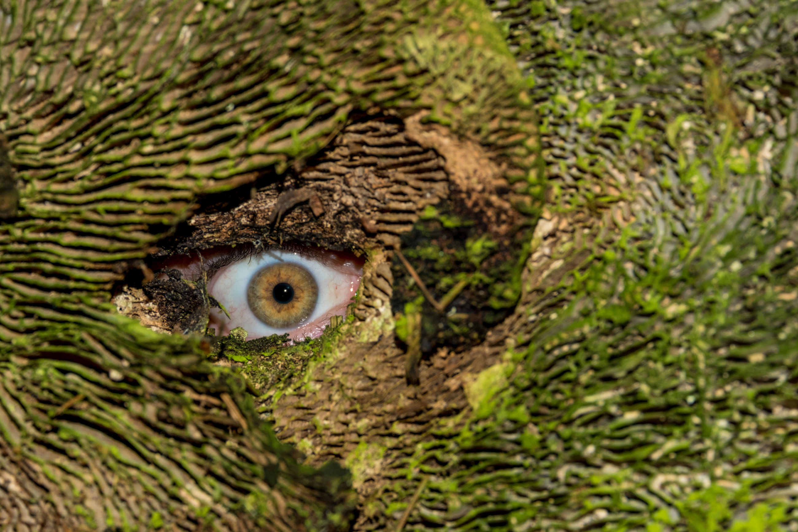 Digital composite image of person looking through mossy wood