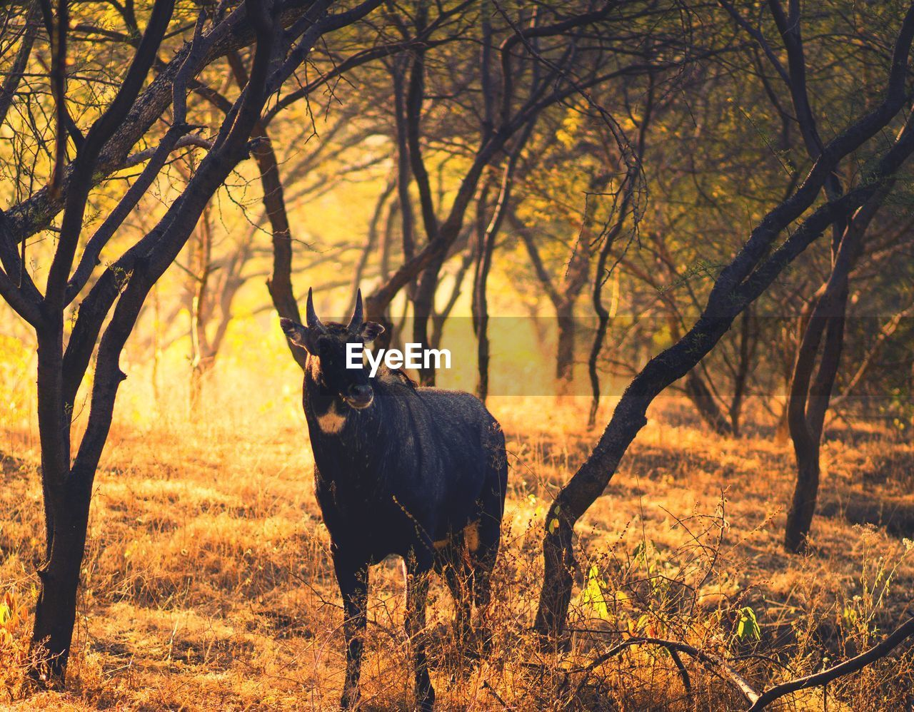 tree, animal themes, animal, plant, mammal, one animal, animal wildlife, vertebrate, land, domestic animals, animals in the wild, nature, no people, standing, branch, field, forest, herbivorous, outdoors, bare tree