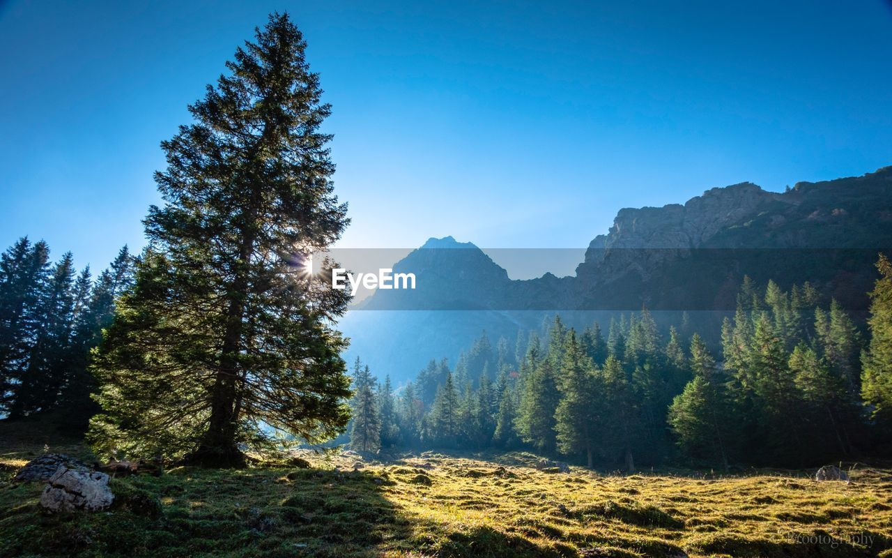tree, plant, sky, mountain, beauty in nature, tranquility, tranquil scene, nature, land, no people, clear sky, landscape, scenics - nature, environment, blue, day, non-urban scene, forest, growth, sunlight, pine tree, coniferous tree, mountain peak