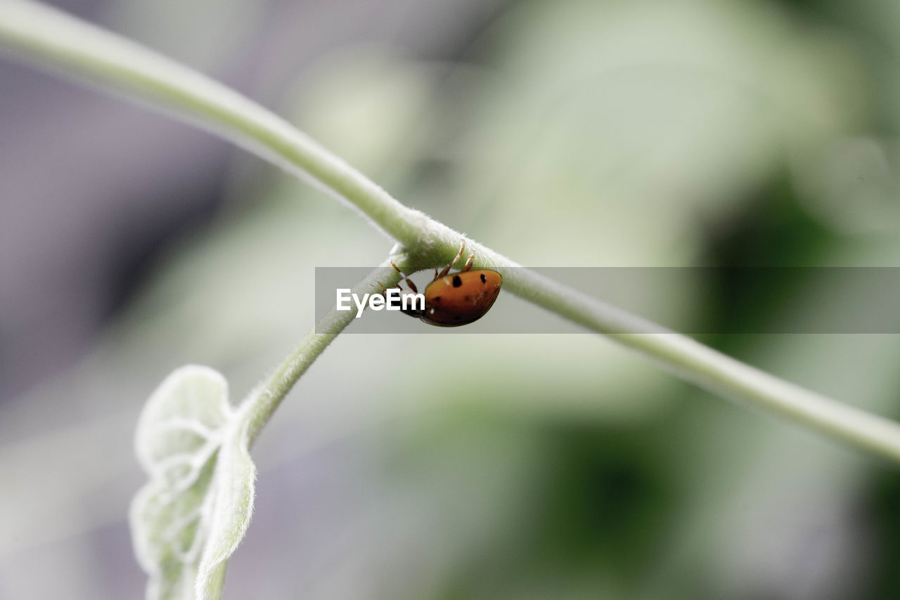 one animal, insect, animals in the wild, animal themes, ladybug, focus on foreground, plant, close-up, animal wildlife, nature, green color, day, fragility, tiny, outdoors, no people, beauty in nature, flower