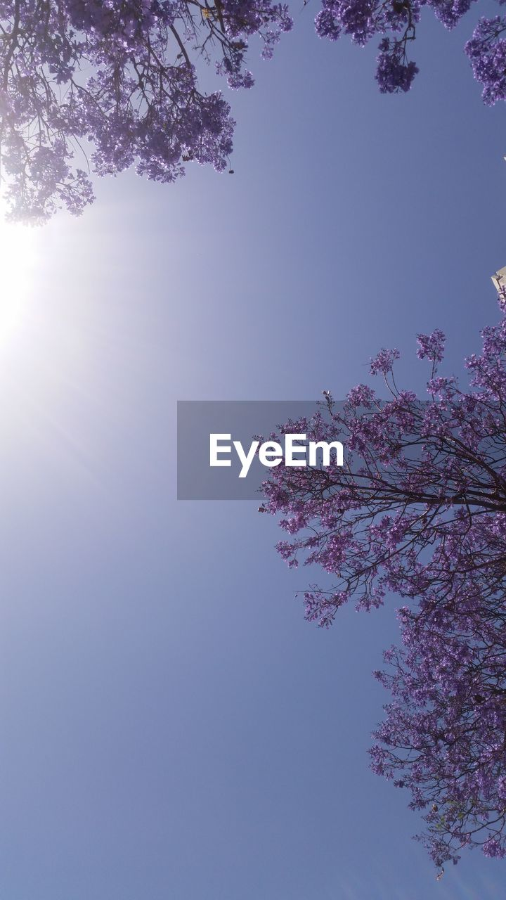 tree, flower, beauty in nature, nature, growth, blossom, low angle view, fragility, branch, springtime, freshness, pink color, no people, clear sky, sky, day, outdoors, tranquility, scenics