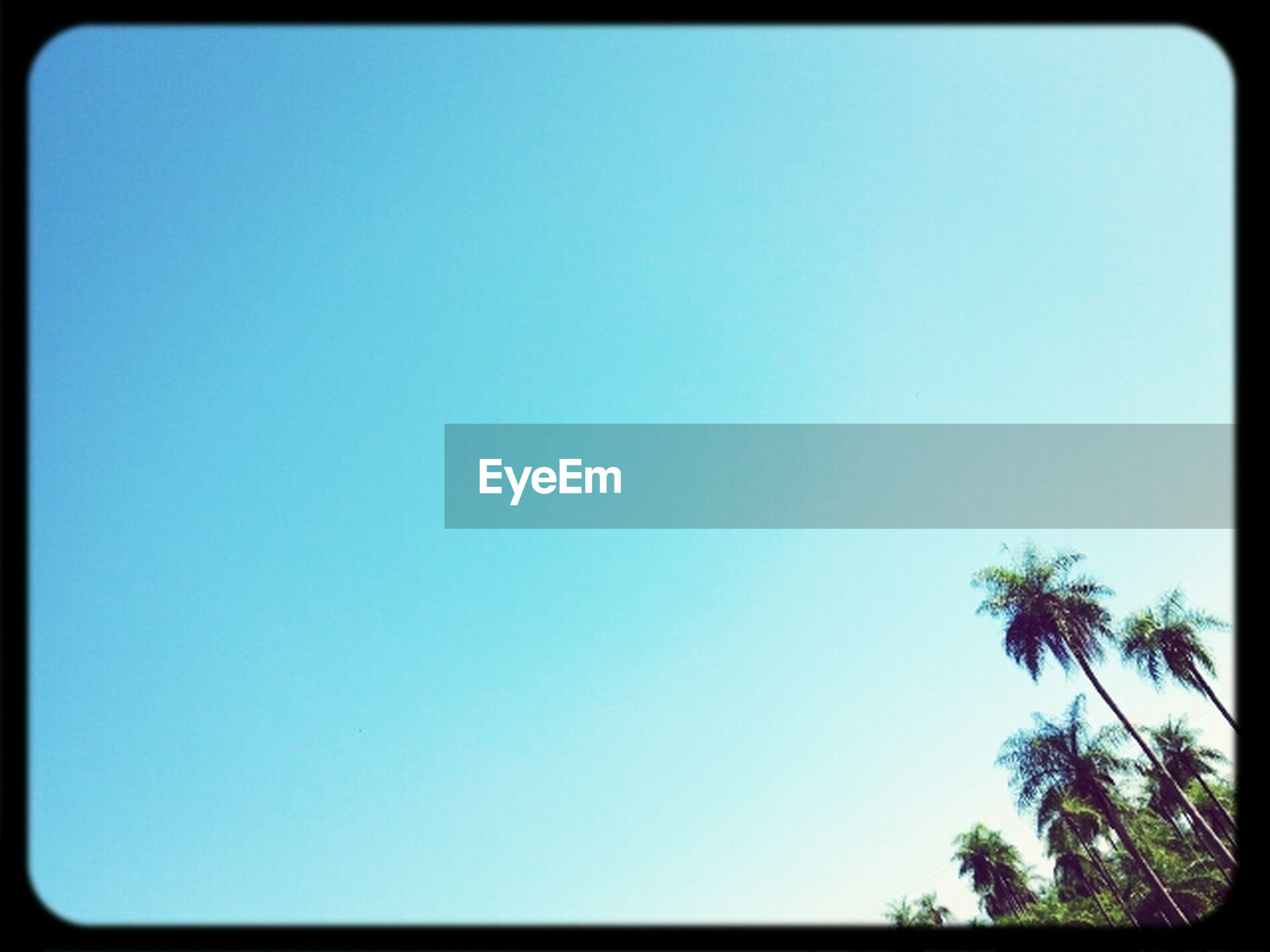clear sky, copy space, blue, low angle view, transfer print, tree, palm tree, auto post production filter, beauty in nature, tranquility, nature, scenics, tranquil scene, growth, silhouette, outdoors, no people, high section, day, idyllic