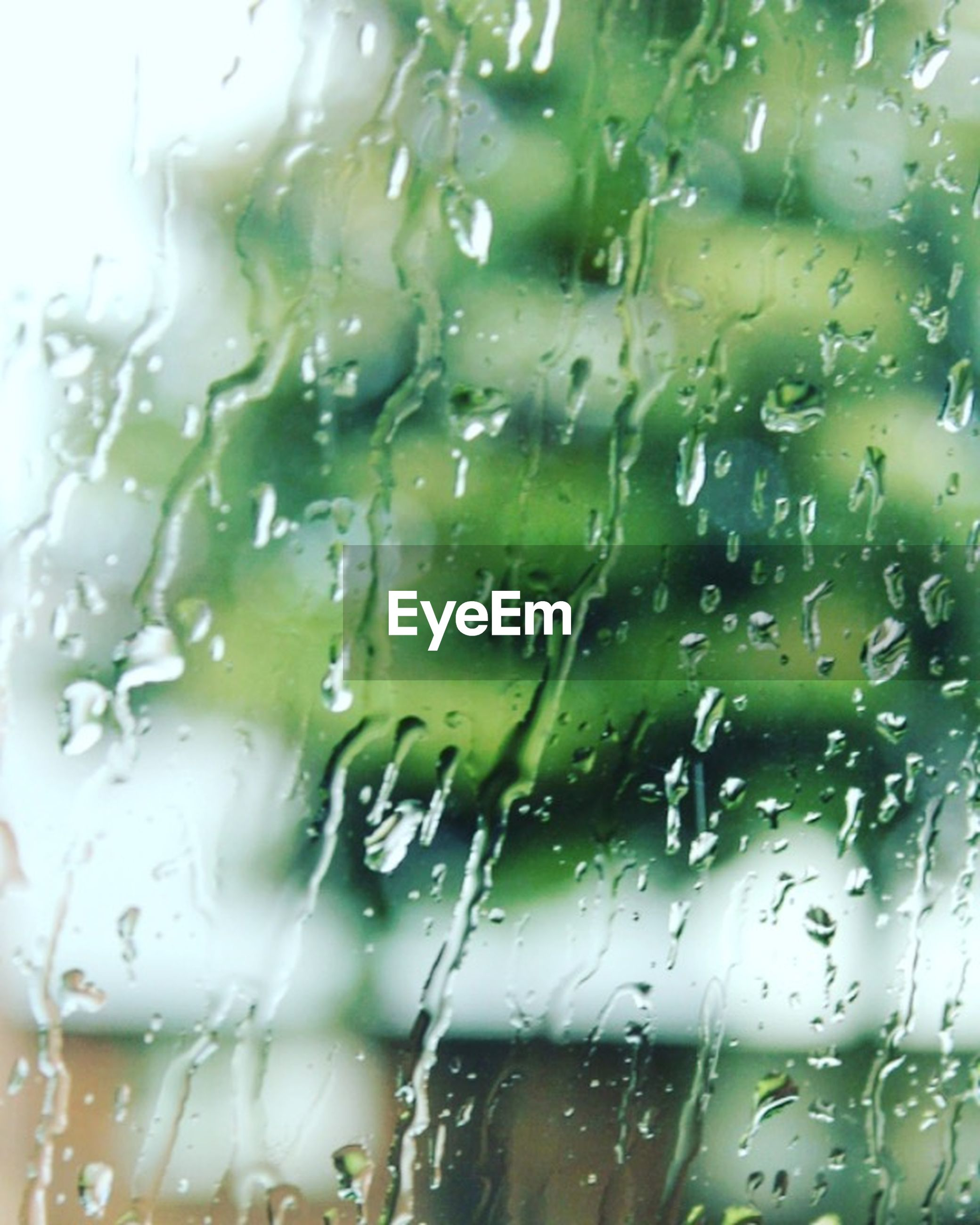 drop, window, wet, indoors, transparent, full frame, glass - material, backgrounds, rain, water, raindrop, focus on foreground, close-up, glass, weather, season, tree, no people, day, detail
