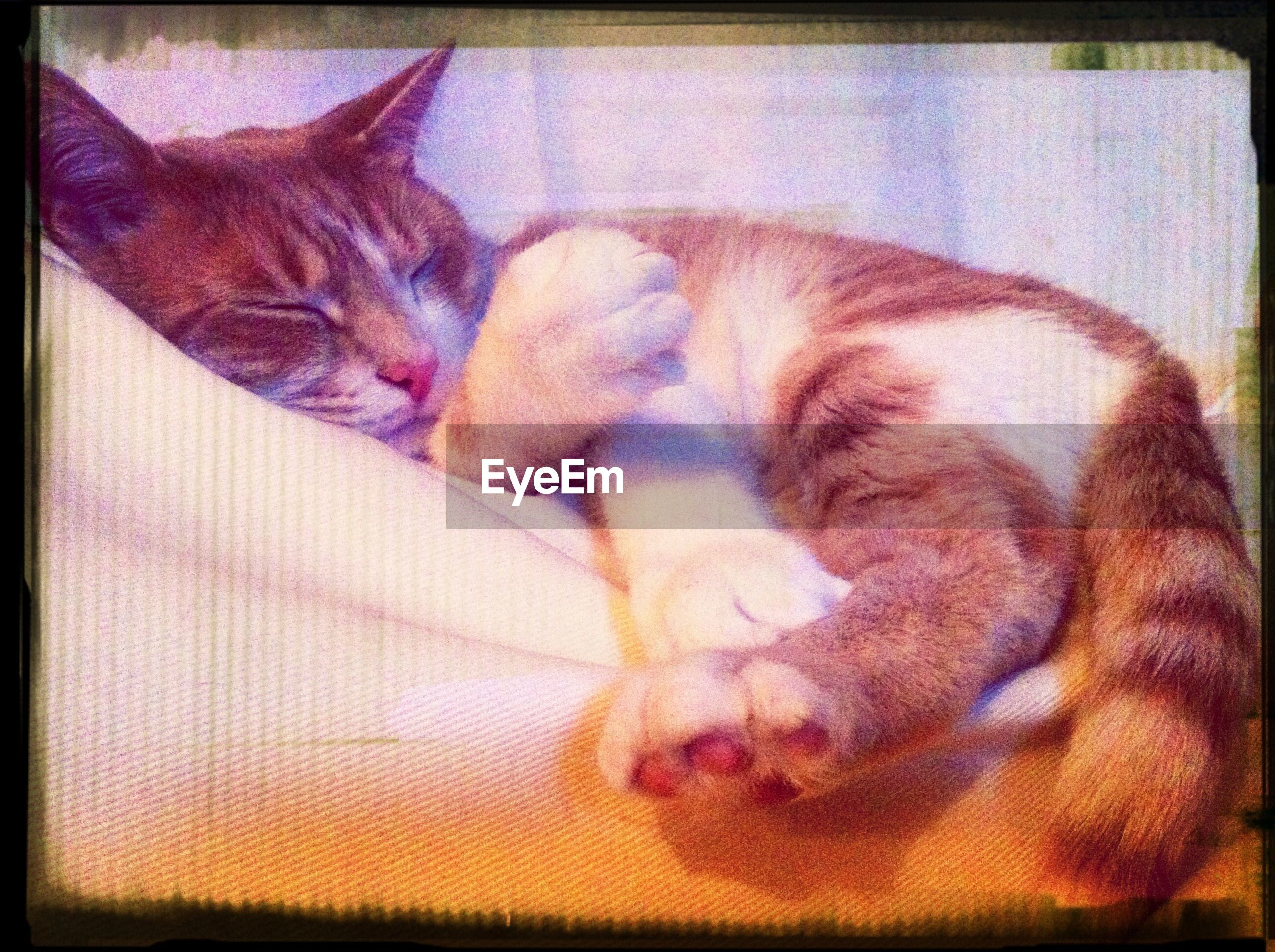 domestic animals, pets, animal themes, mammal, one animal, domestic cat, cat, indoors, feline, relaxation, transfer print, sleeping, resting, auto post production filter, lying down, whisker, home interior, vertebrate, animal, home