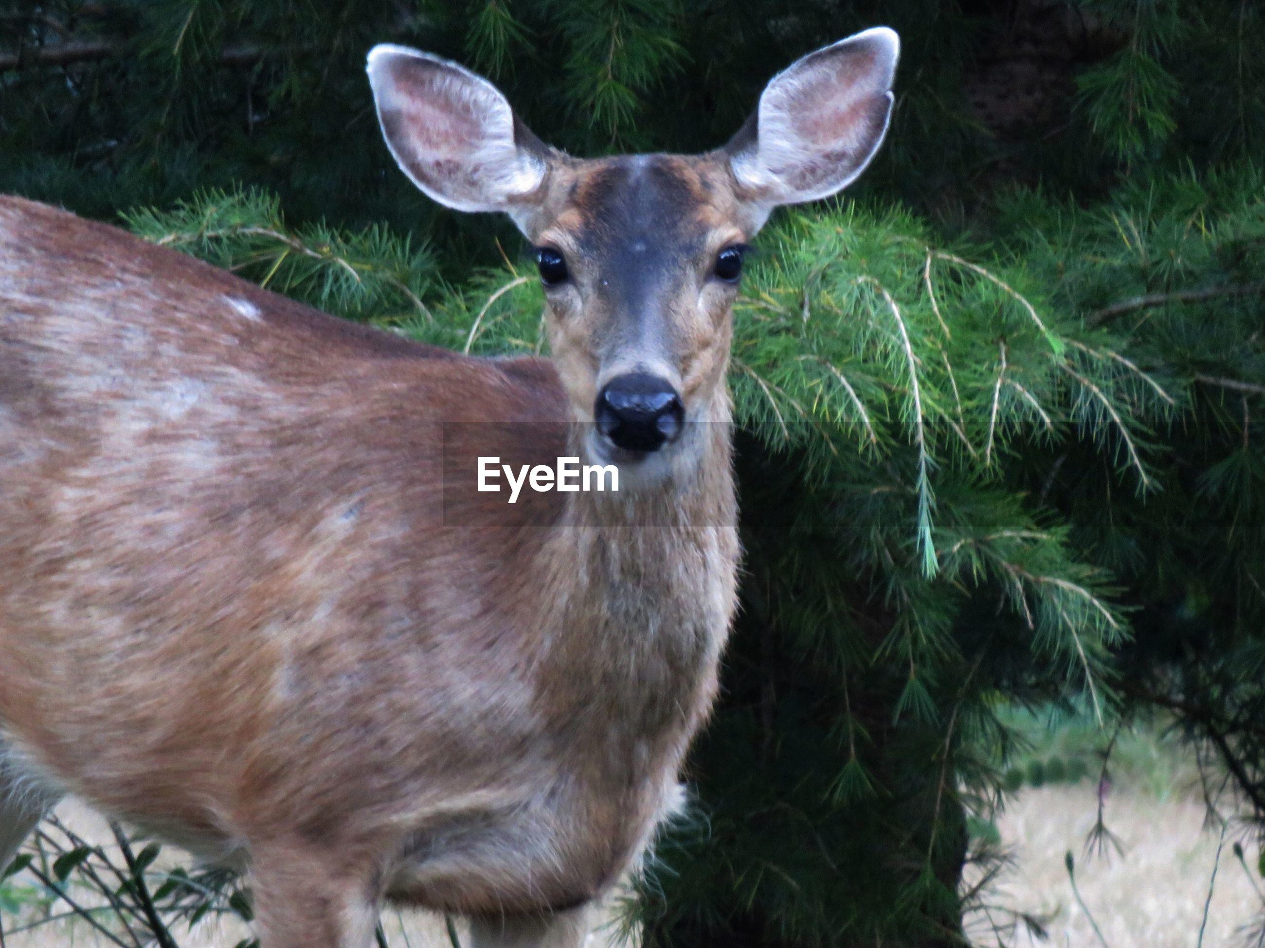 Portrait of deer by plants