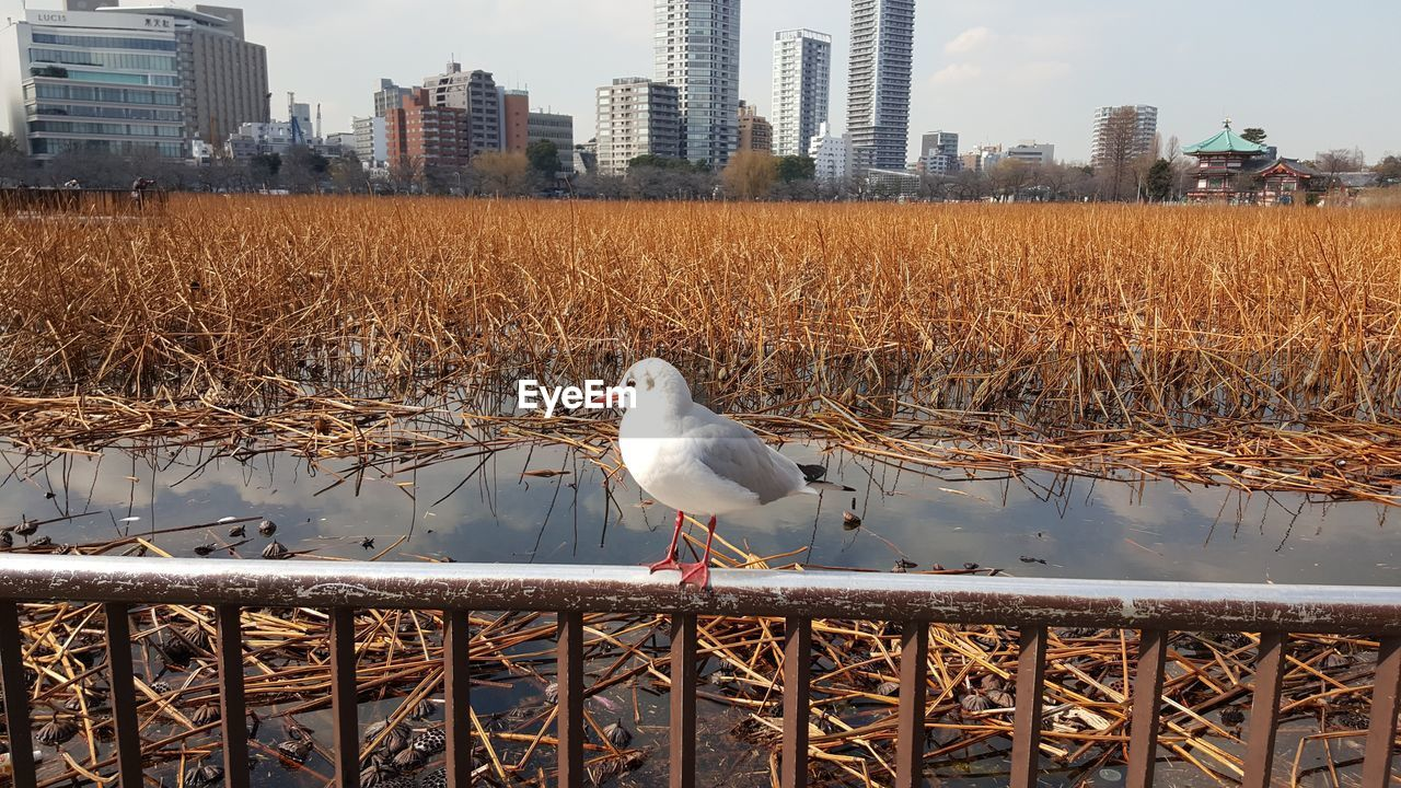 bird, animal themes, vertebrate, animal, architecture, built structure, one animal, building exterior, animals in the wild, nature, city, perching, water, animal wildlife, day, no people, seagull, building, office building exterior, outdoors, skyscraper