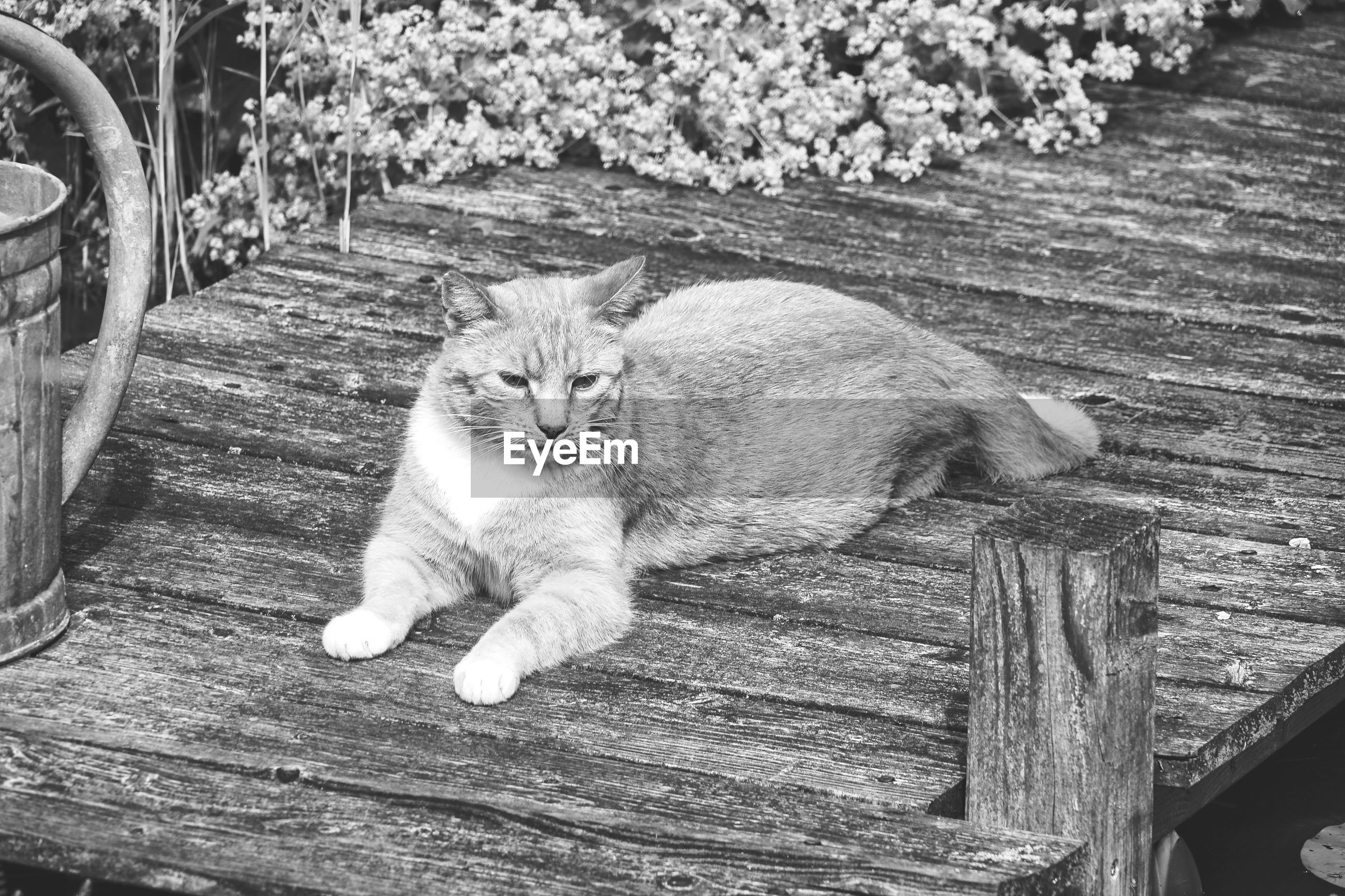 HIGH ANGLE PORTRAIT OF CAT RESTING ON WOOD