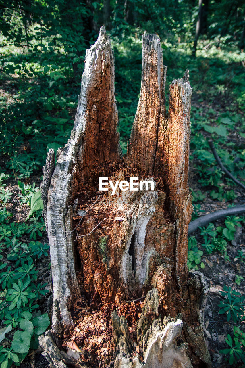 tree, plant, tree trunk, trunk, wood - material, forest, nature, close-up, day, land, bark, no people, wood, tree stump, deforestation, focus on foreground, textured, log, outdoors, timber, woodland, dead plant