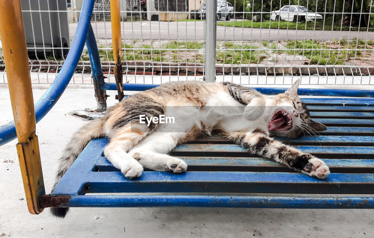 High Angle View Of Cat Yawning On Swing At Playground