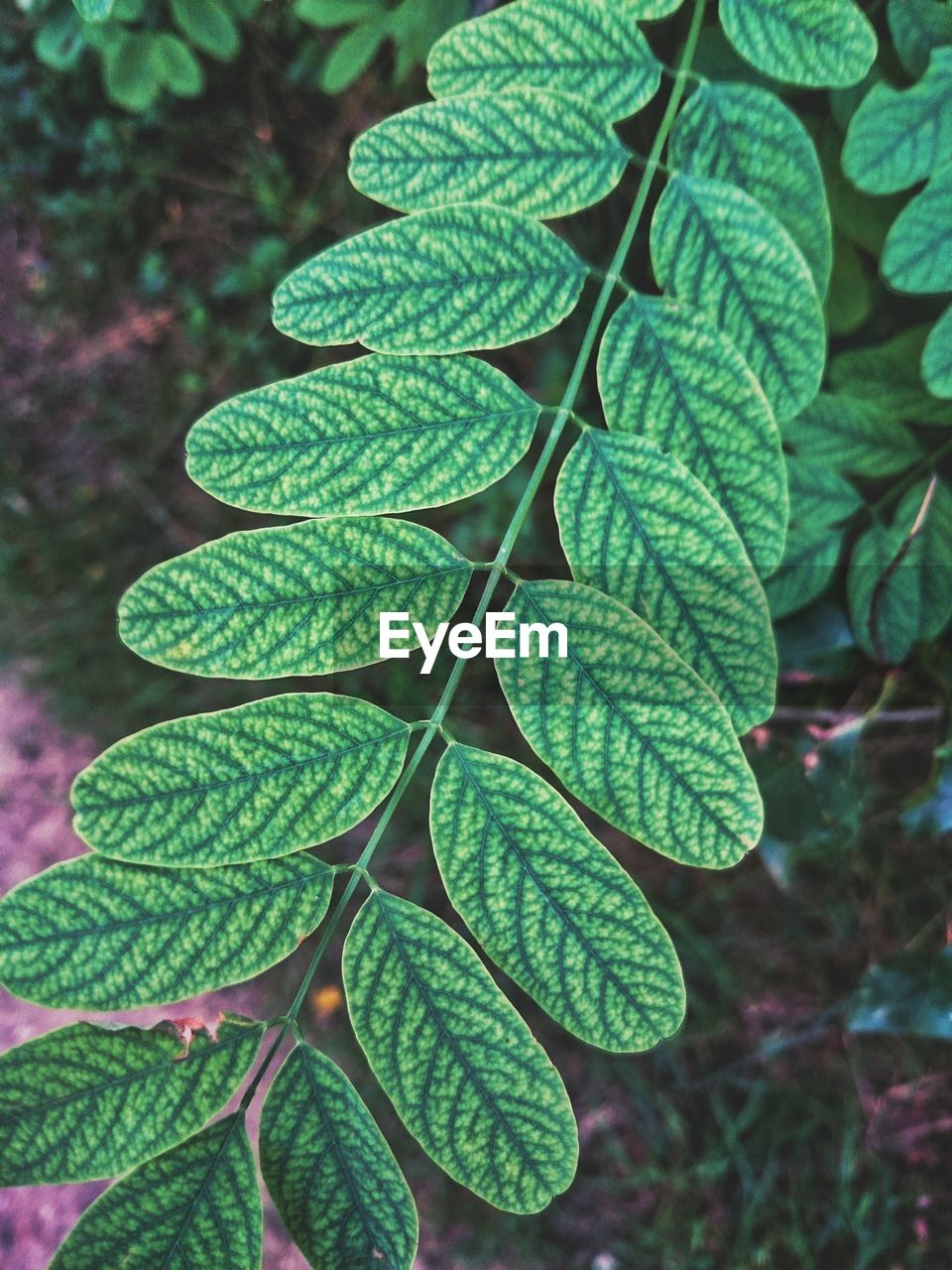 leaf, green color, growth, nature, plant, close-up, beauty in nature, outdoors, no people, day, focus on foreground, freshness, fragility