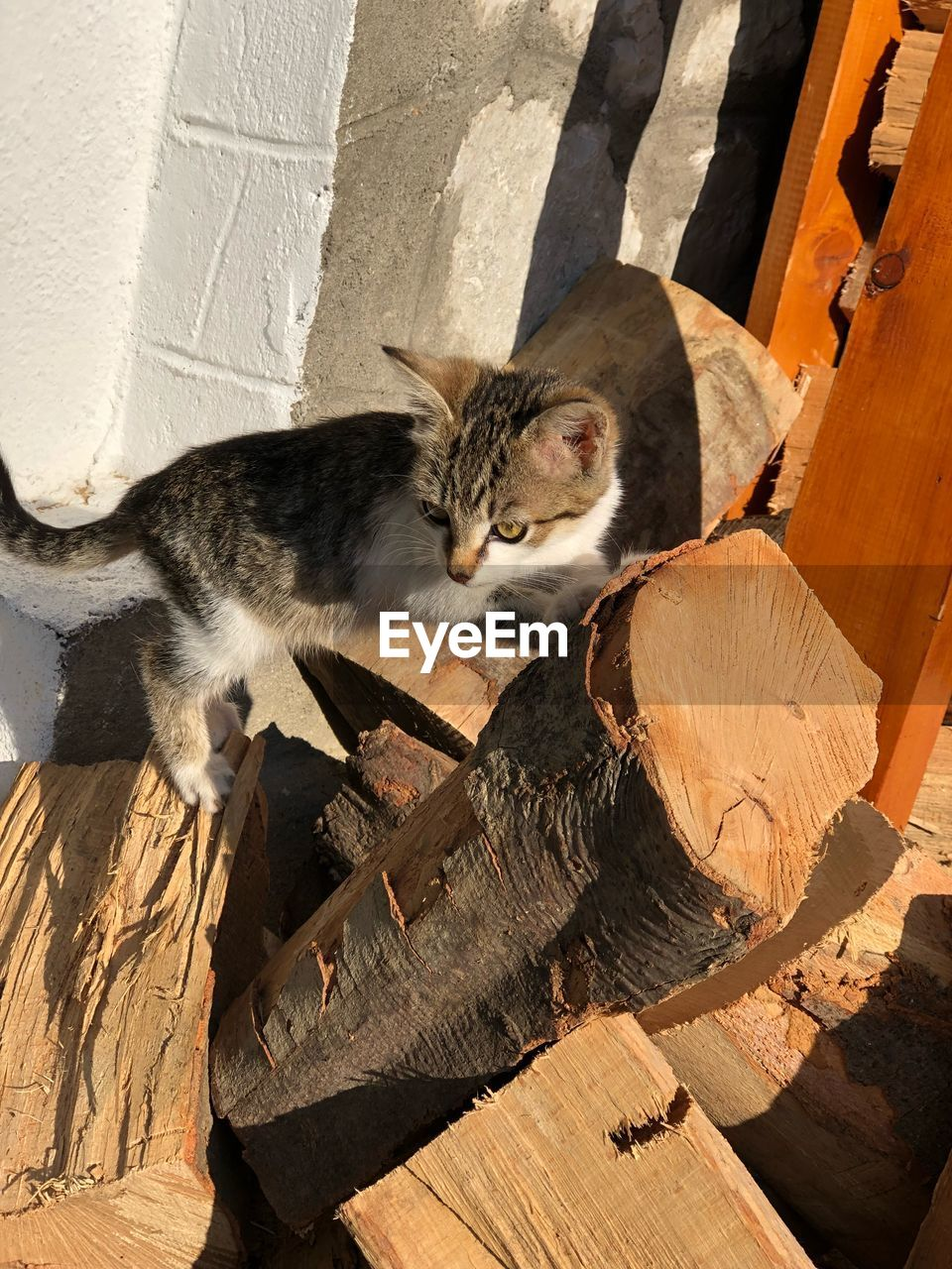 cat, domestic cat, feline, domestic, pets, mammal, animal themes, domestic animals, animal, vertebrate, one animal, no people, high angle view, relaxation, wood - material, day, sunlight, nature, looking at camera, whisker