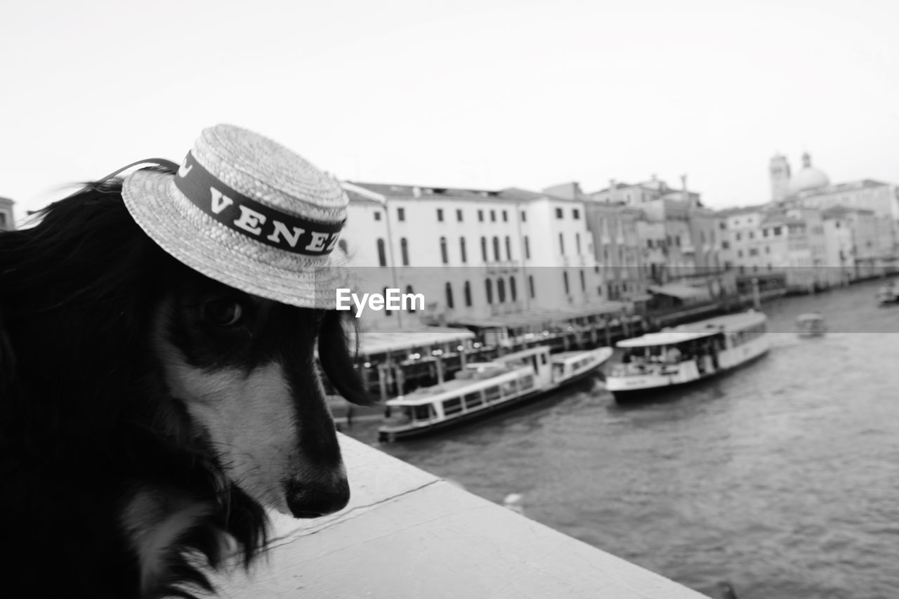 hat, one animal, water, animal themes, animal, nautical vessel, mammal, building exterior, transportation, architecture, built structure, domestic animals, day, domestic, pets, mode of transportation, clothing, dog, sky, canal