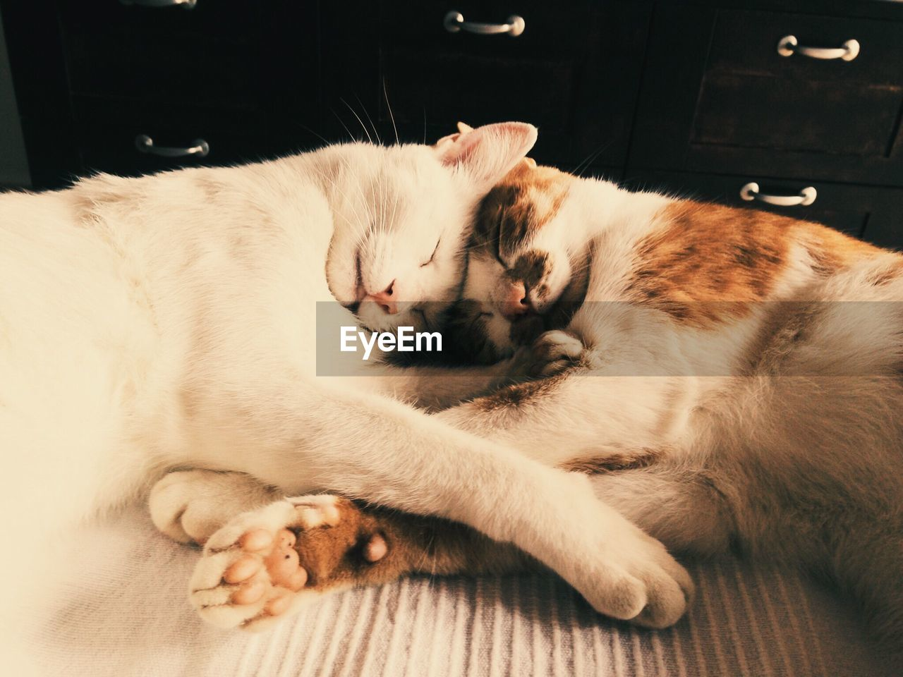 pets, domestic, domestic animals, animal themes, one animal, mammal, animal, vertebrate, relaxation, domestic cat, cat, indoors, feline, resting, eyes closed, sleeping, lying down, no people, furniture, home interior, whisker