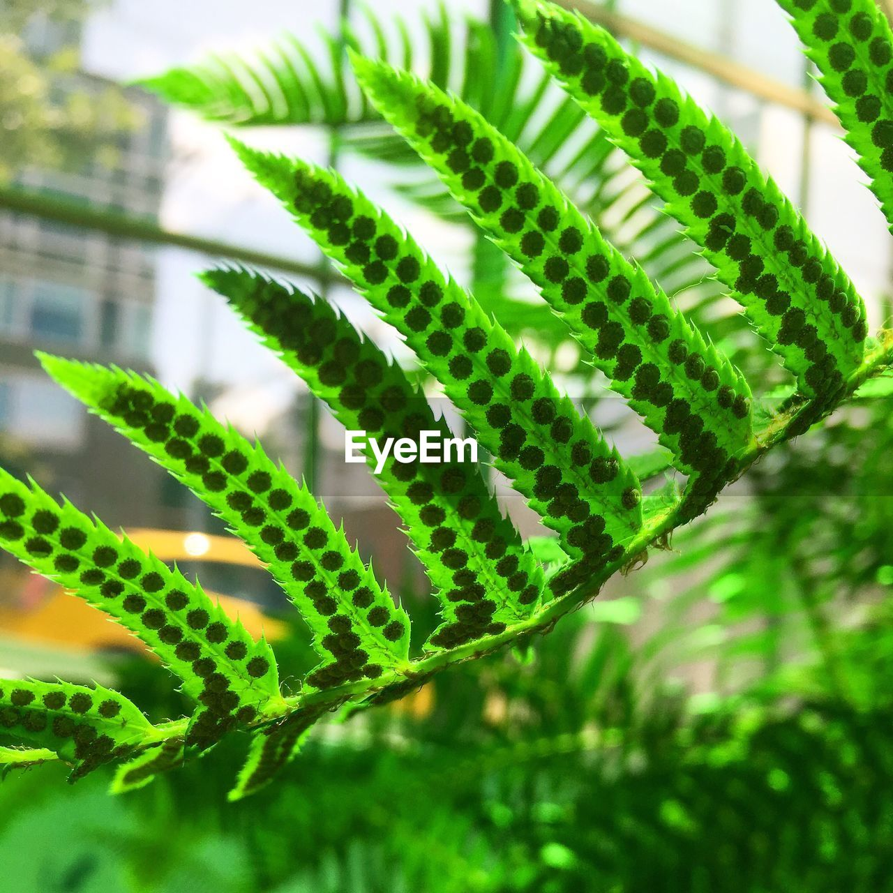 green color, growth, focus on foreground, plant, close-up, no people, nature, day, outdoors, beauty in nature, leaf, animal themes, freshness