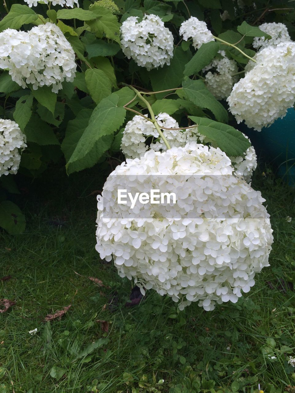 growth, flower, white color, beauty in nature, nature, fragility, plant, no people, day, freshness, green color, leaf, outdoors, flower head, blooming, close-up