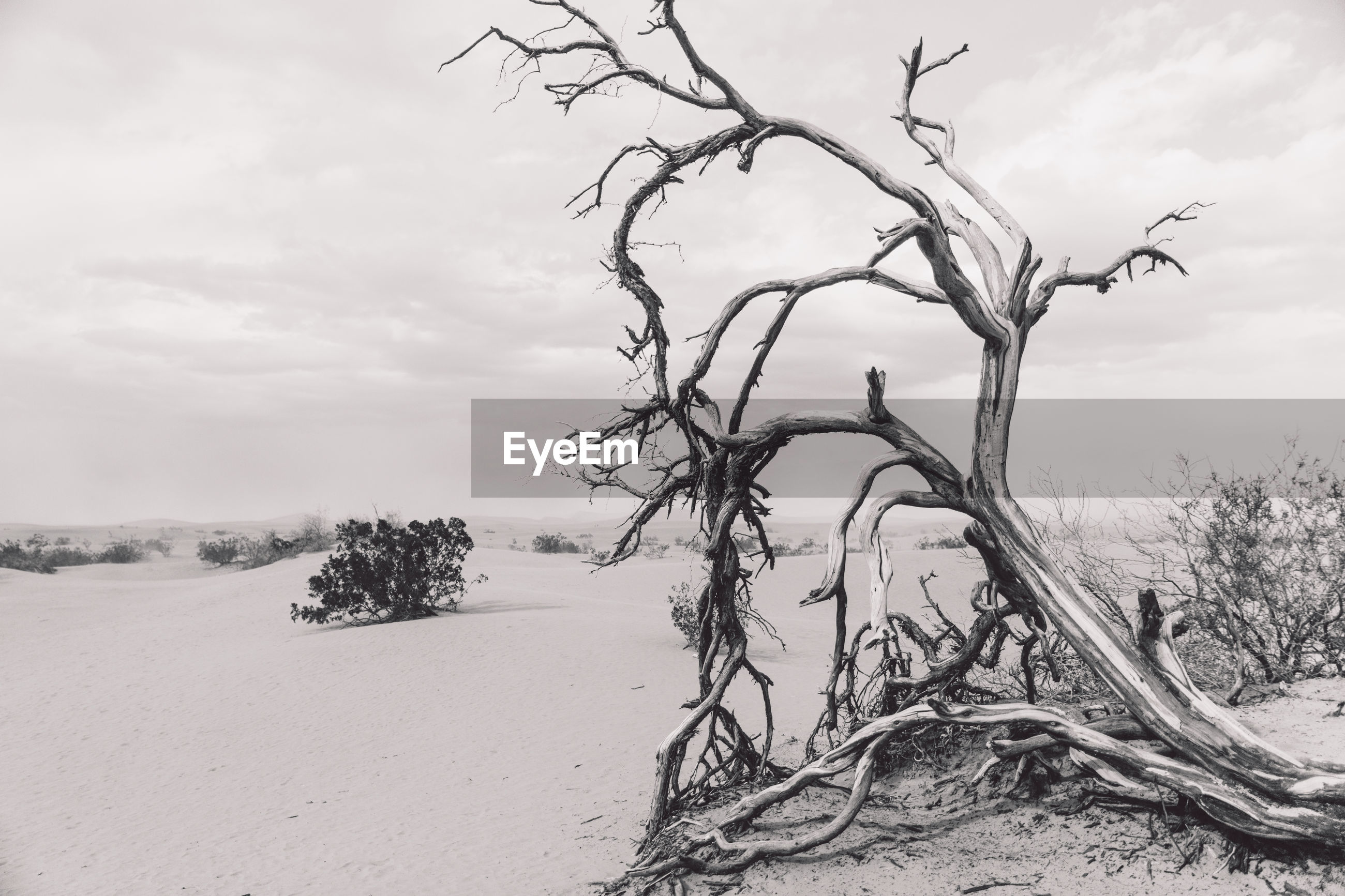 Bare tree at death valley against sky