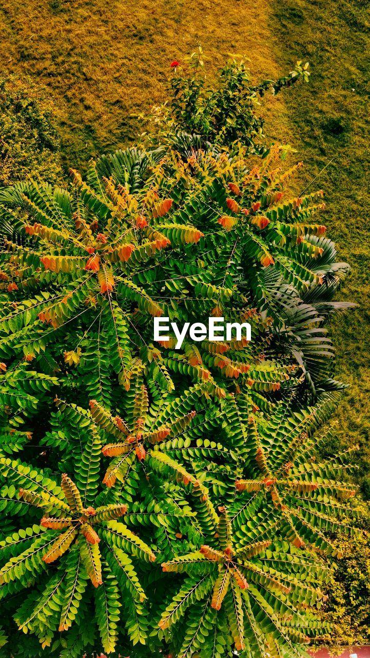 HIGH ANGLE VIEW OF FRESH PLANTS