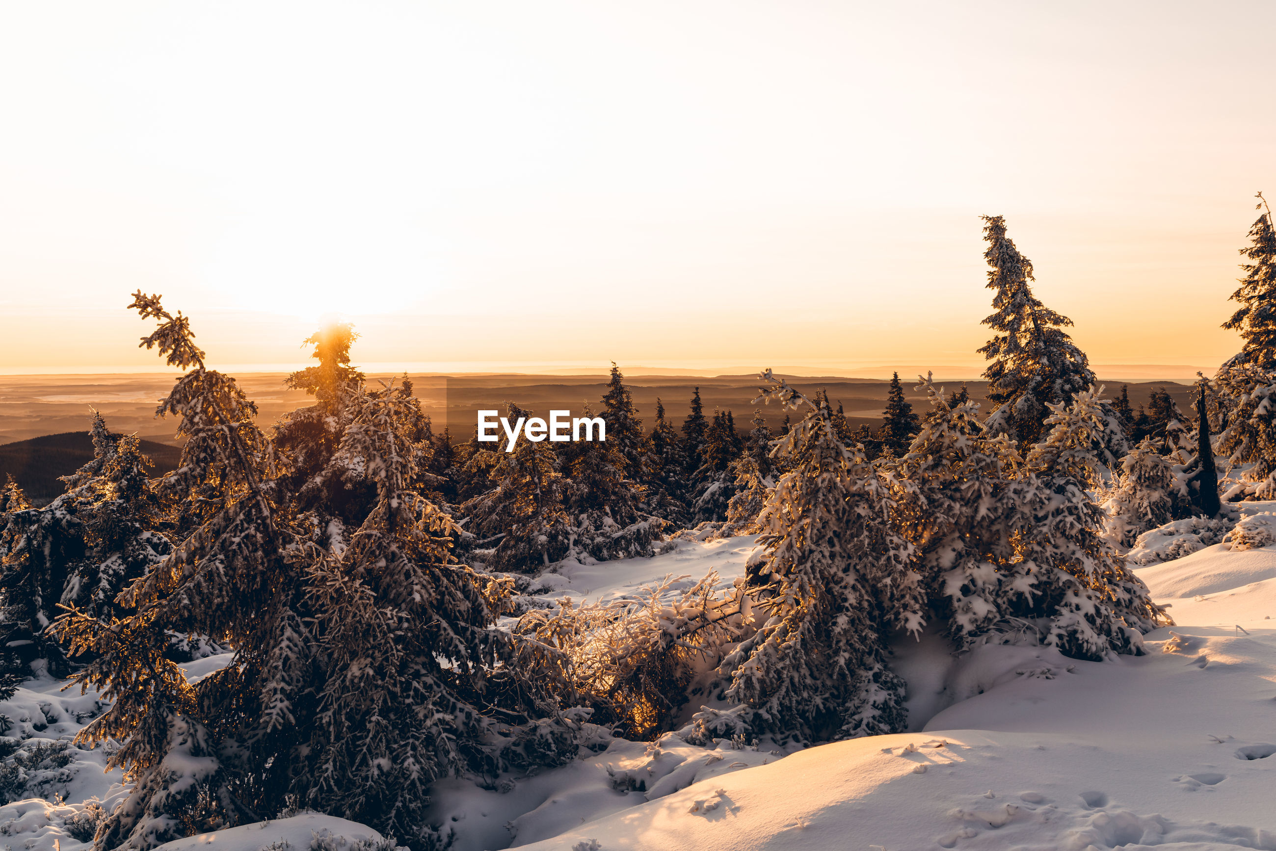 Plants on snow covered land against sky during sunset