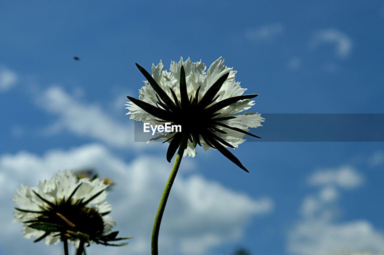 White Wildflowers In Meadow