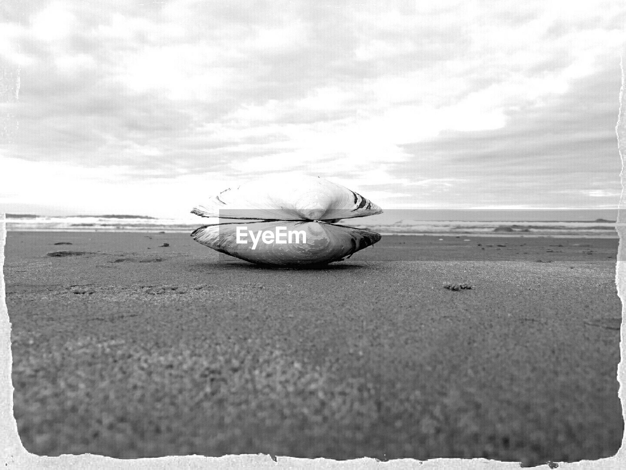 Seashell on beach