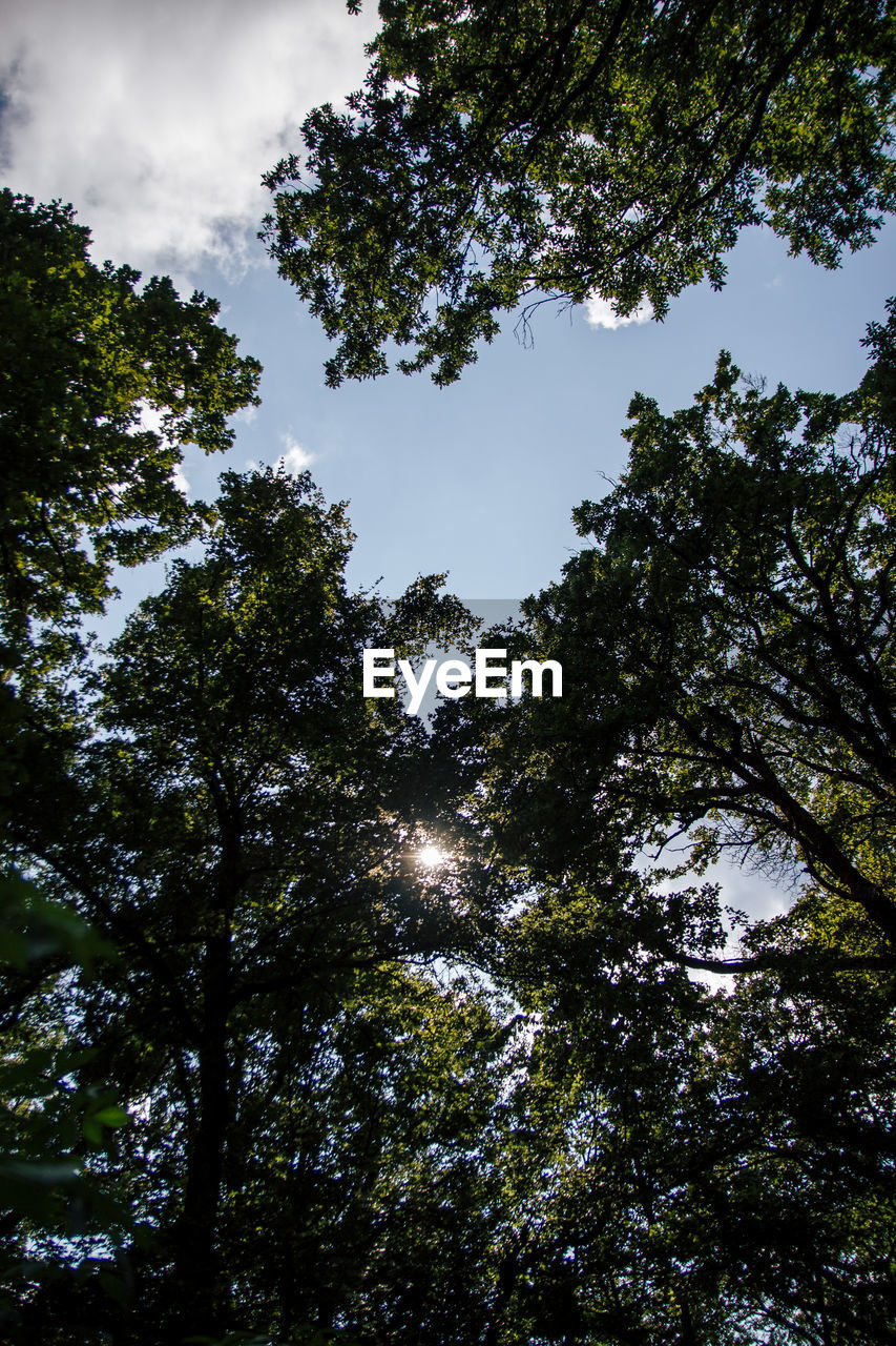 tree, plant, low angle view, growth, sky, beauty in nature, tranquility, nature, no people, day, outdoors, green color, forest, directly below, scenics - nature, sunlight, land, tall - high, branch, clear sky, tree canopy, high