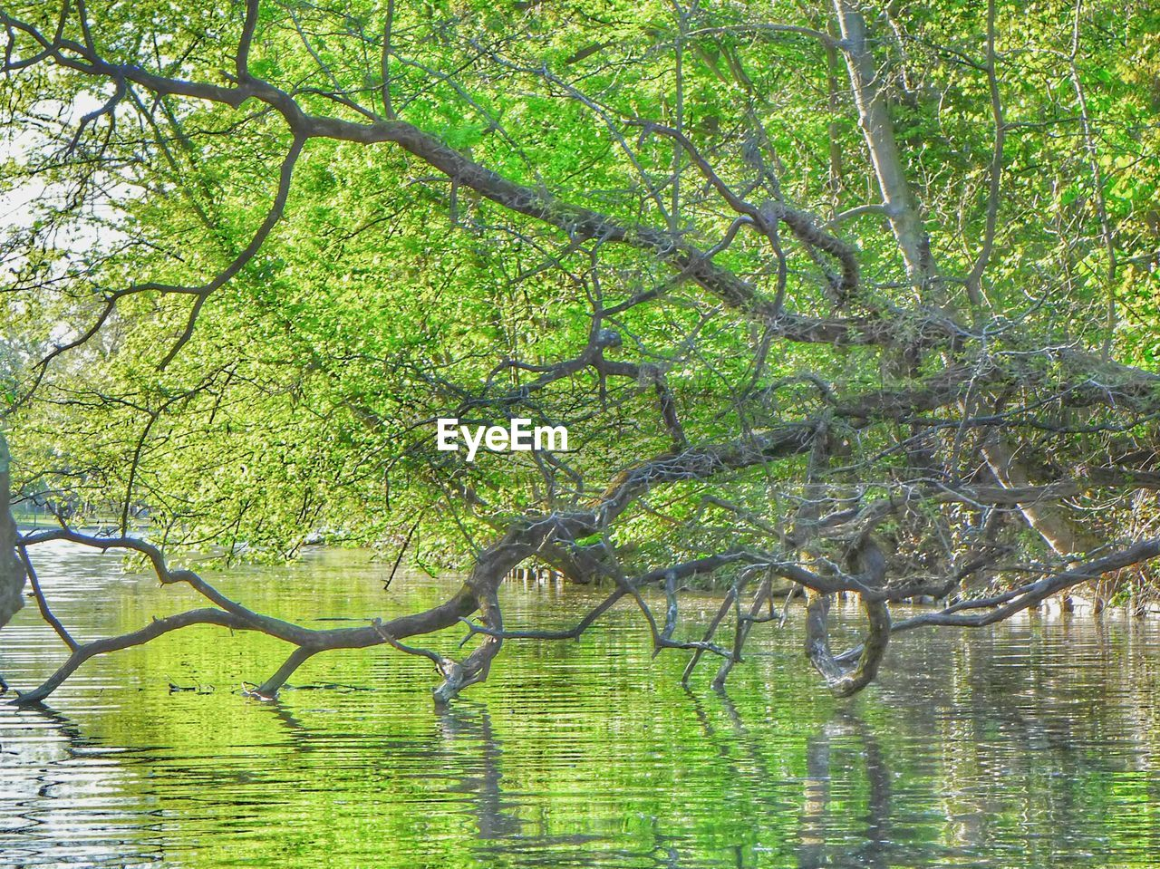 tree, plant, growth, green color, beauty in nature, branch, nature, tranquility, no people, day, water, outdoors, lake, trunk, tree trunk, forest, land, tranquil scene, scenics - nature