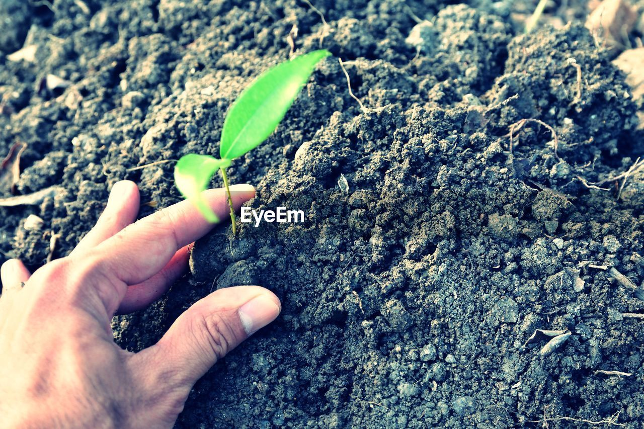 Cropped image of man touching sapling growing on field