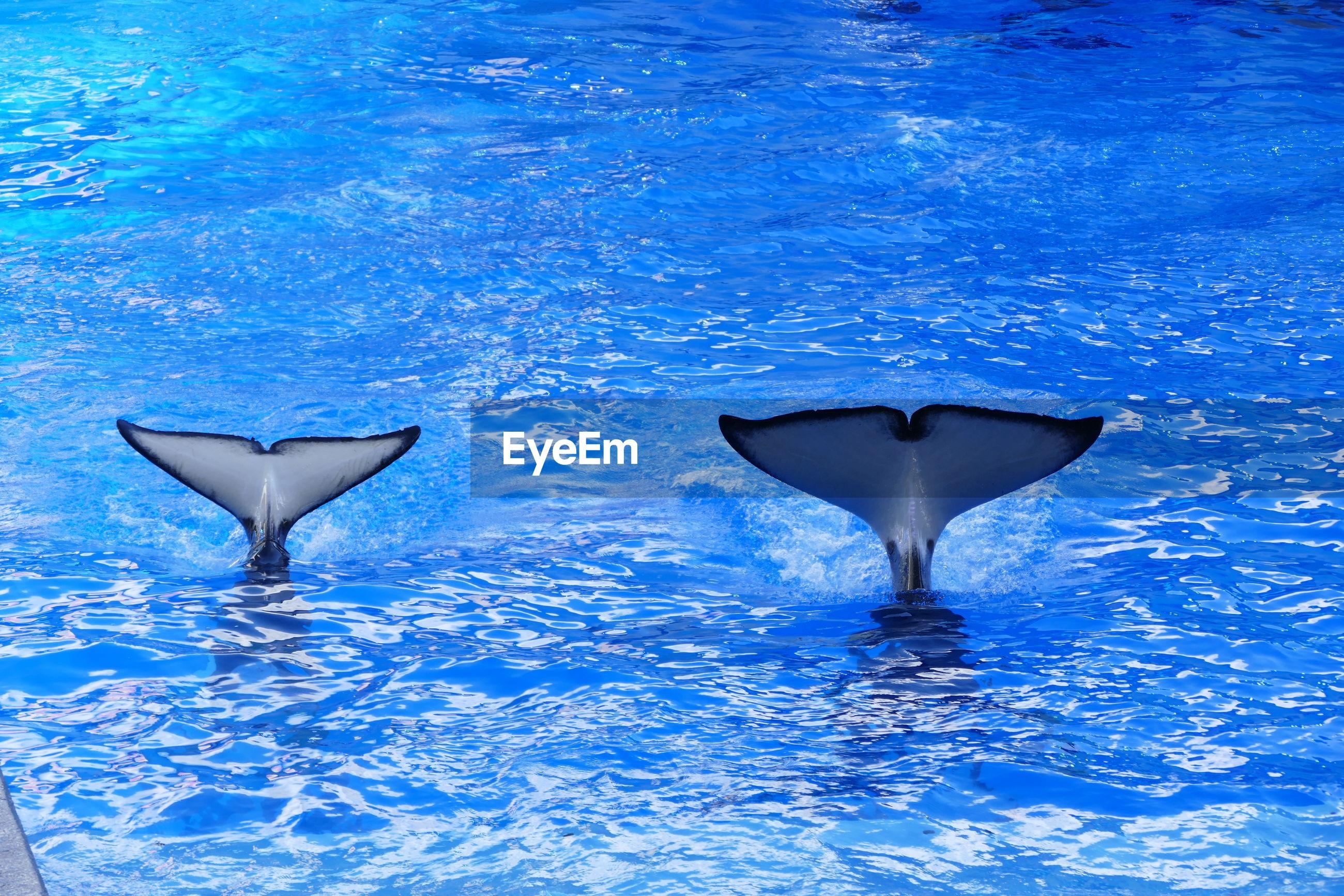 Whales flukes