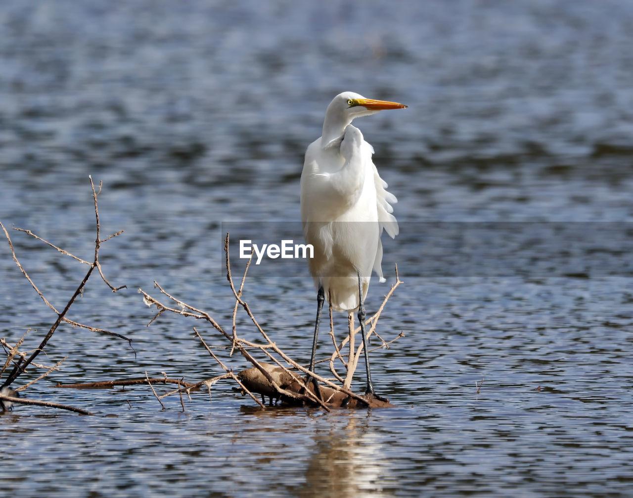 Heron perching in lake
