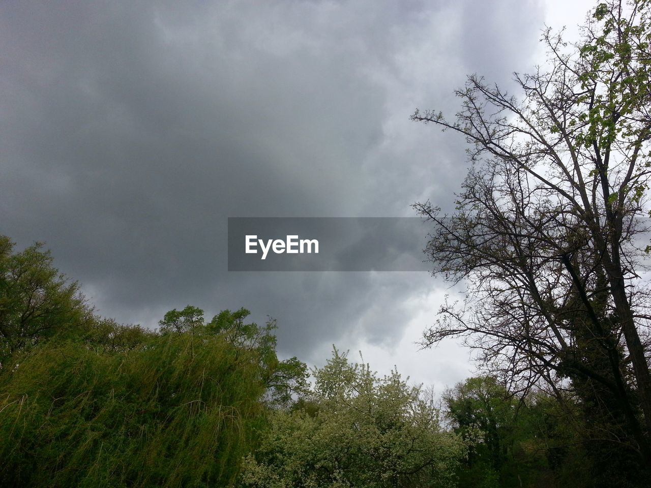 tree, nature, sky, weather, low angle view, cloud - sky, no people, beauty in nature, outdoors, storm, growth, storm cloud, day, scenics, forest, thunderstorm