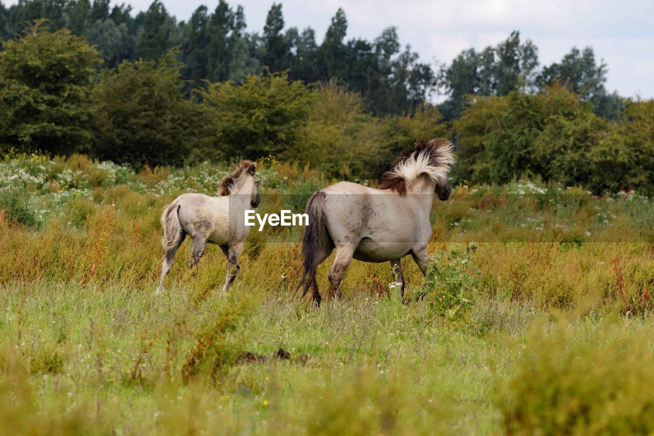 View Of Horses Walking In Field