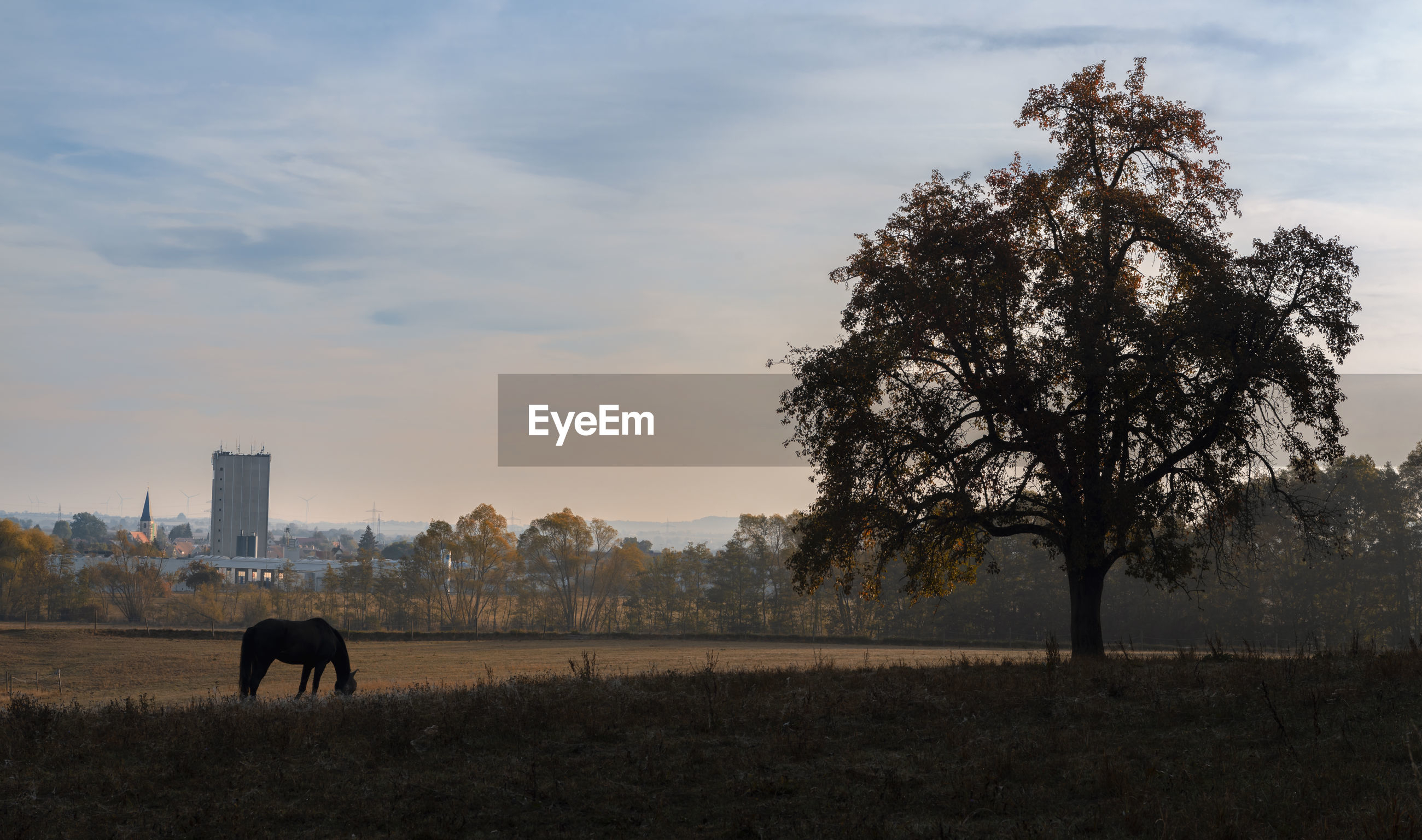 Silhouette horse grazing on field against sky