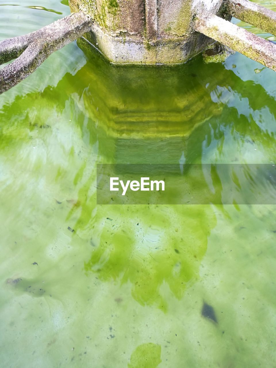 green color, water, no people, high angle view, close-up, day, nature, outdoors, freshness