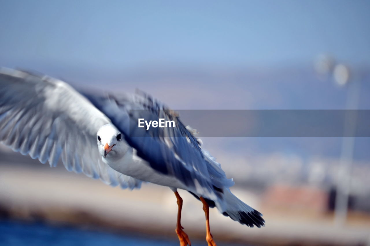 bird, spread wings, one animal, animal themes, animals in the wild, animal wildlife, flying, nature, day, focus on foreground, no people, outdoors, water, mid-air, seagull, sea, beauty in nature, close-up, sky