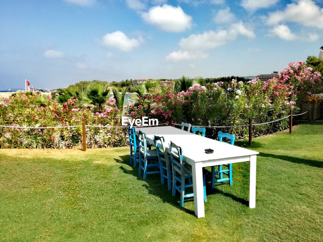 plant, grass, sky, cloud - sky, nature, seat, day, chair, tree, table, green color, no people, absence, growth, sunlight, flowering plant, empty, flower, architecture, field, outdoors