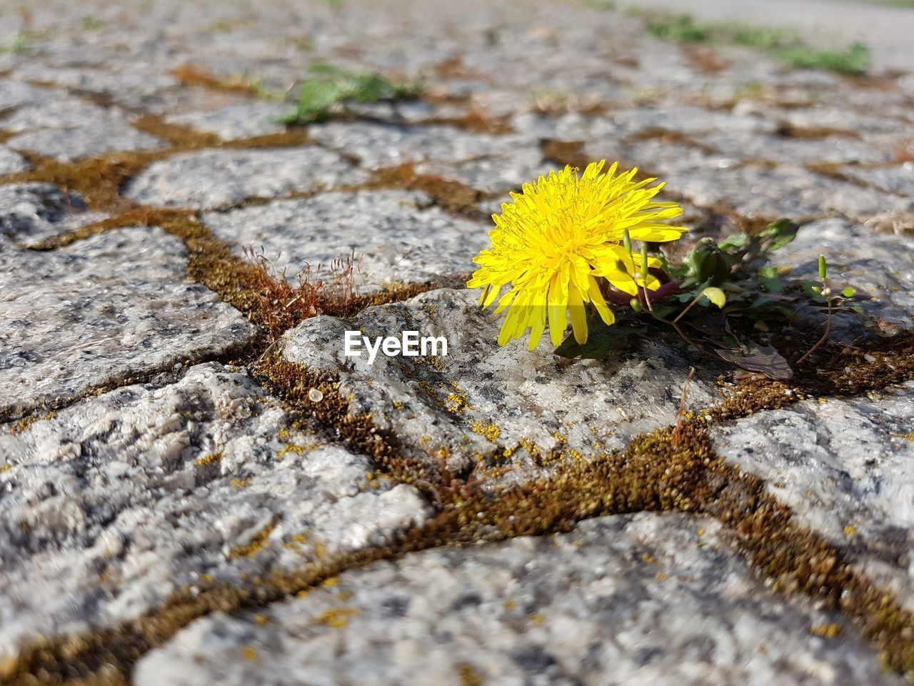 flower, yellow, flowering plant, plant, fragility, freshness, close-up, vulnerability, no people, selective focus, beauty in nature, inflorescence, day, nature, growth, flower head, petal, solid, textured, outdoors, lichen