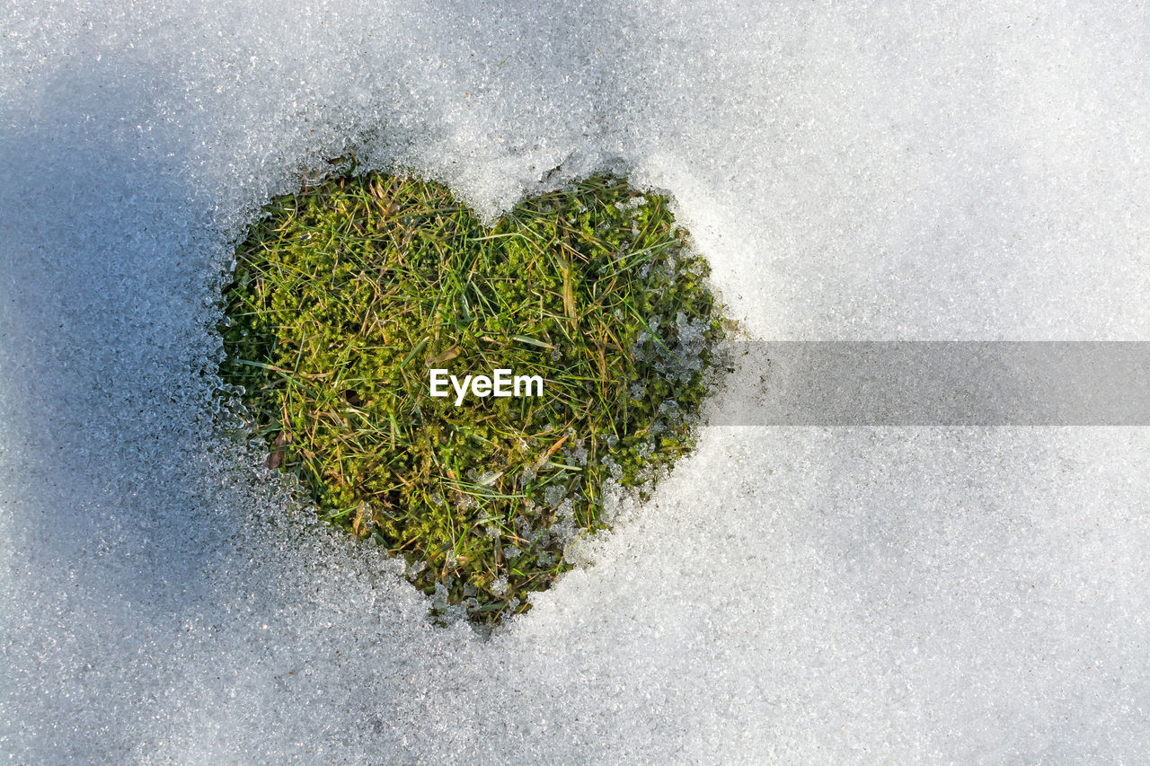 green color, no people, directly above, nature, heart shape, positive emotion, emotion, plant, love, high angle view, growth, day, close-up, beauty in nature, outdoors, water, studio shot, land, healthcare and medicine