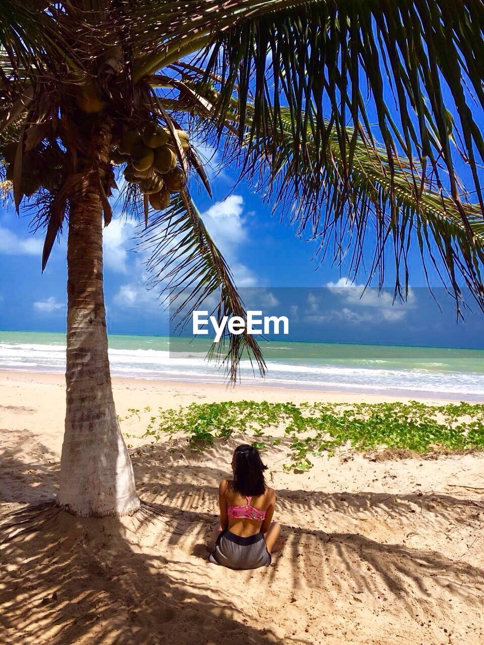 Rear view of woman sitting by coconut palm tree at beach