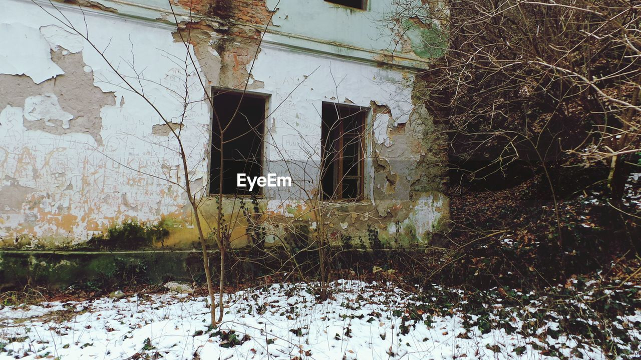 architecture, built structure, building exterior, building, plant, abandoned, snow, tree, day, window, no people, winter, nature, old, cold temperature, house, outdoors, run-down, damaged, deterioration