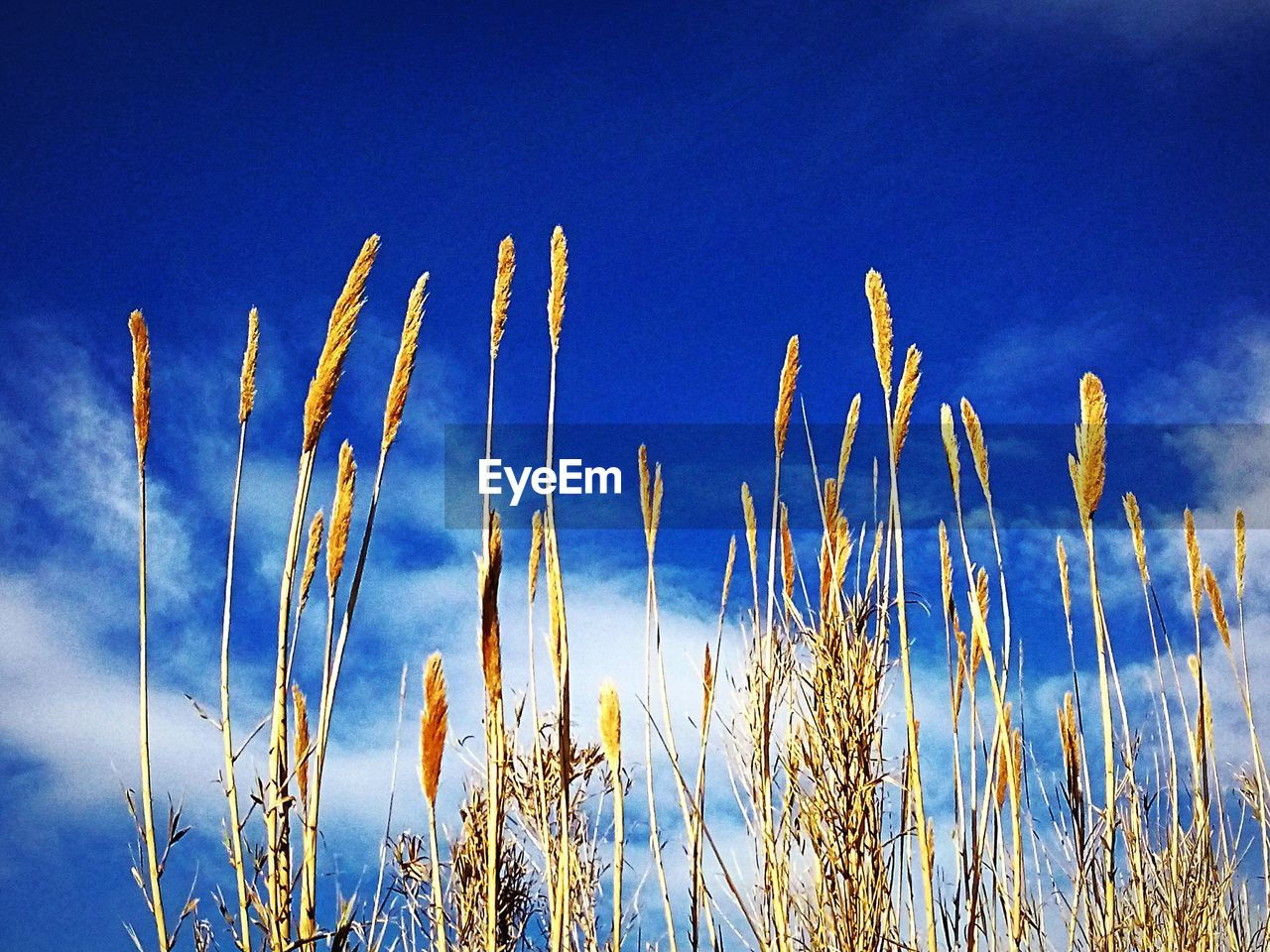 growth, nature, blue, no people, beauty in nature, tranquility, plant, tranquil scene, sky, outdoors, low angle view, day, close-up