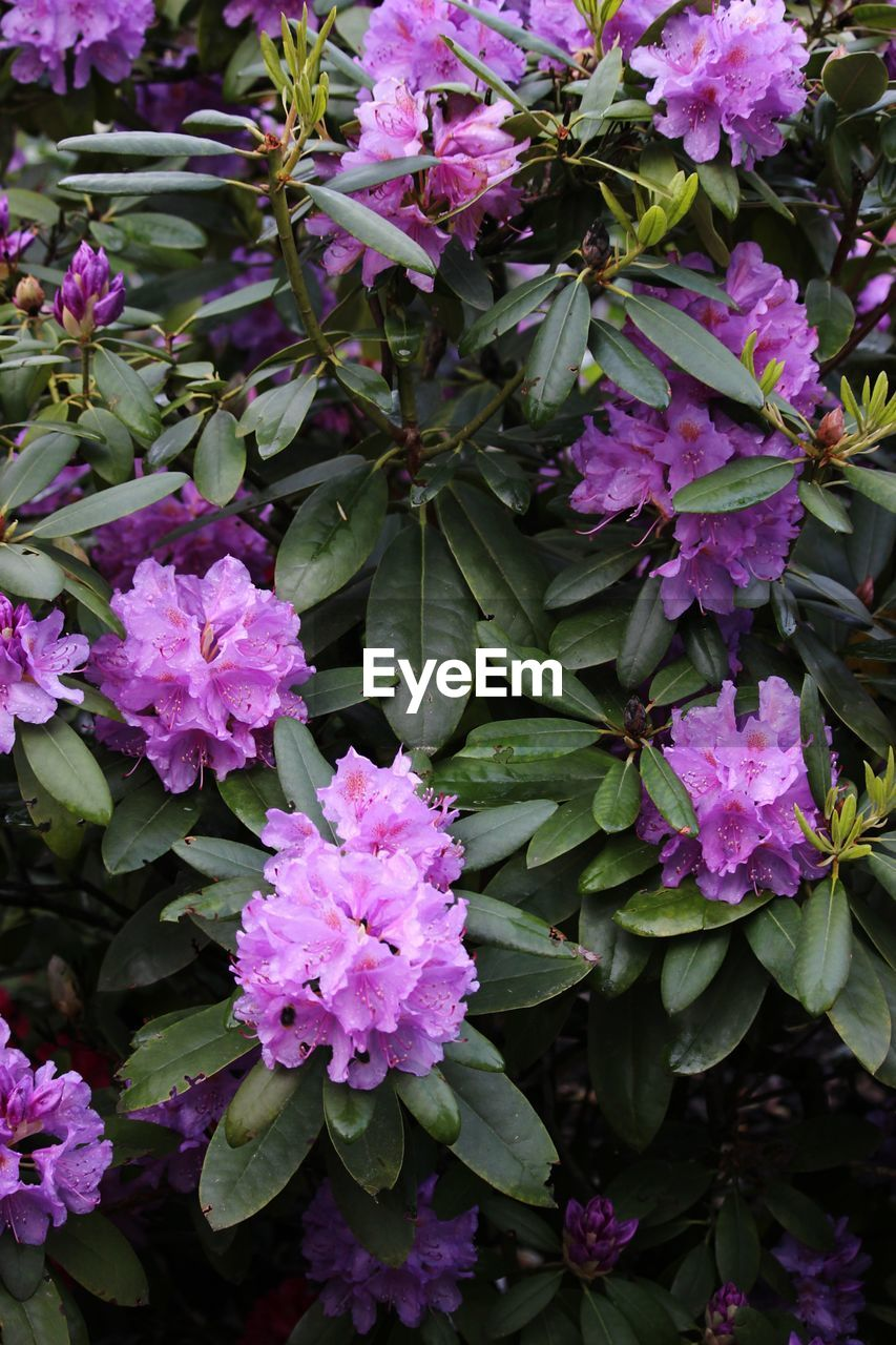 flowering plant, flower, beauty in nature, plant, growth, freshness, fragility, vulnerability, petal, pink color, plant part, leaf, purple, nature, no people, close-up, botany, inflorescence, day, flower head, outdoors, springtime, bunch of flowers