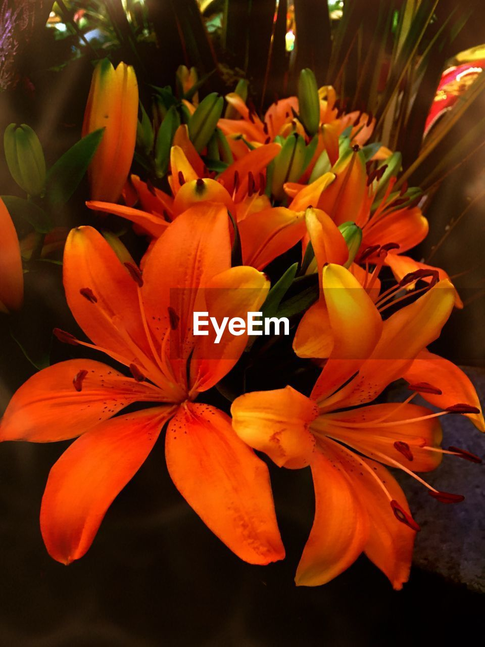 flowering plant, flower, plant, petal, fragility, beauty in nature, vulnerability, freshness, close-up, growth, flower head, inflorescence, orange color, no people, nature, focus on foreground, botany, pollen, outdoors, day, bunch of flowers