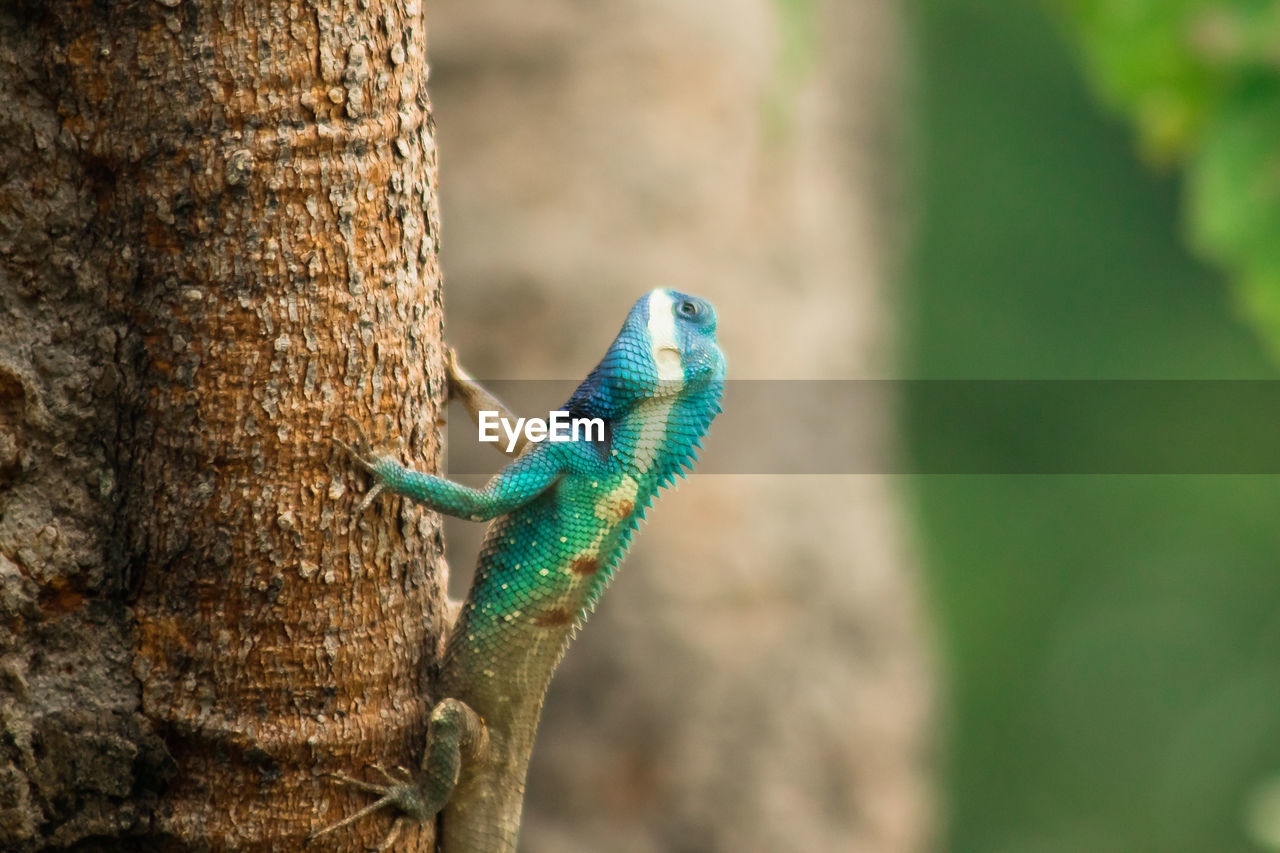 Close-up of a lizard on tree trunk